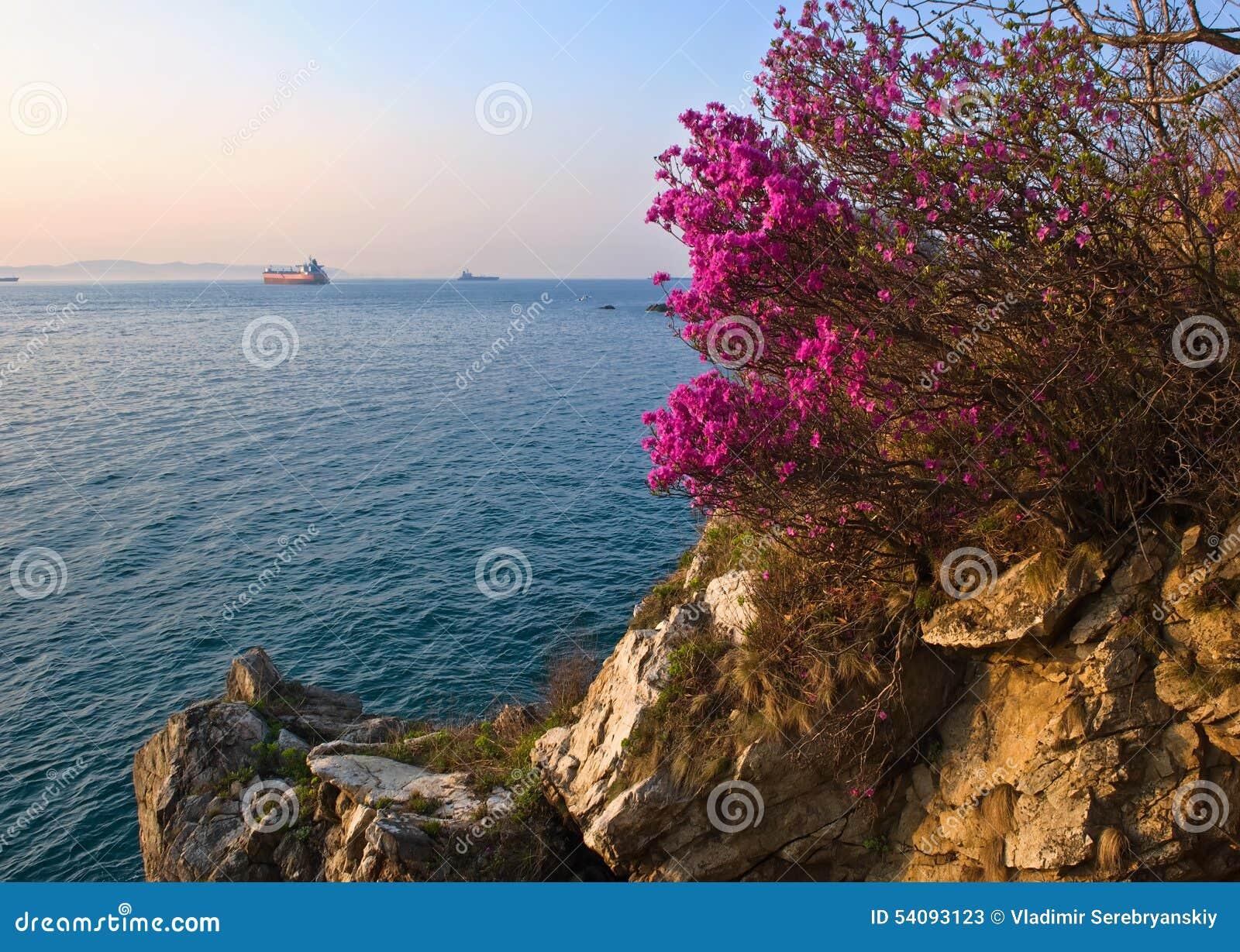 Rododendron die op de kust bloeien