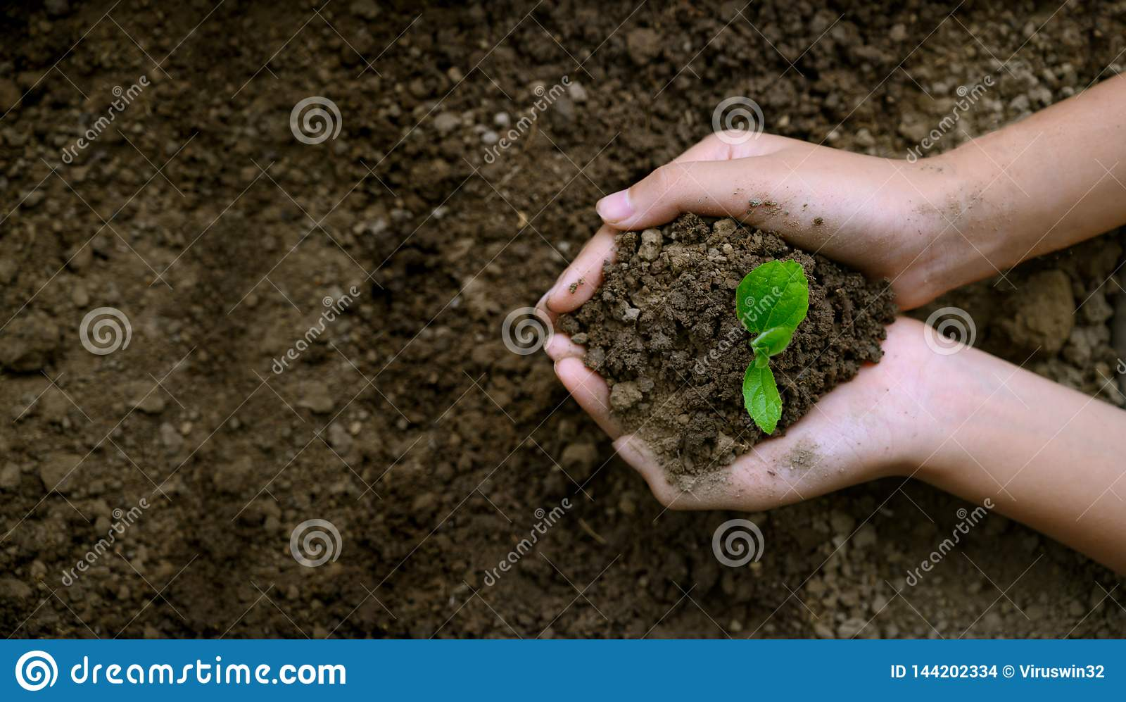 ?rodowisko Ziemski dzie? W r?kach drzewa r rozsady Bokeh zielenieje t?o r?ki mienia ?e?skiego drzewa na natury polu