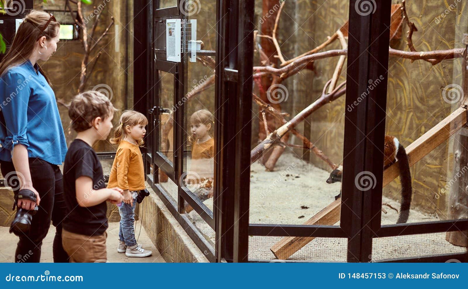 Rodzina przy zoo spojrzeniem przy zwierzętami przez zbawczego szkła