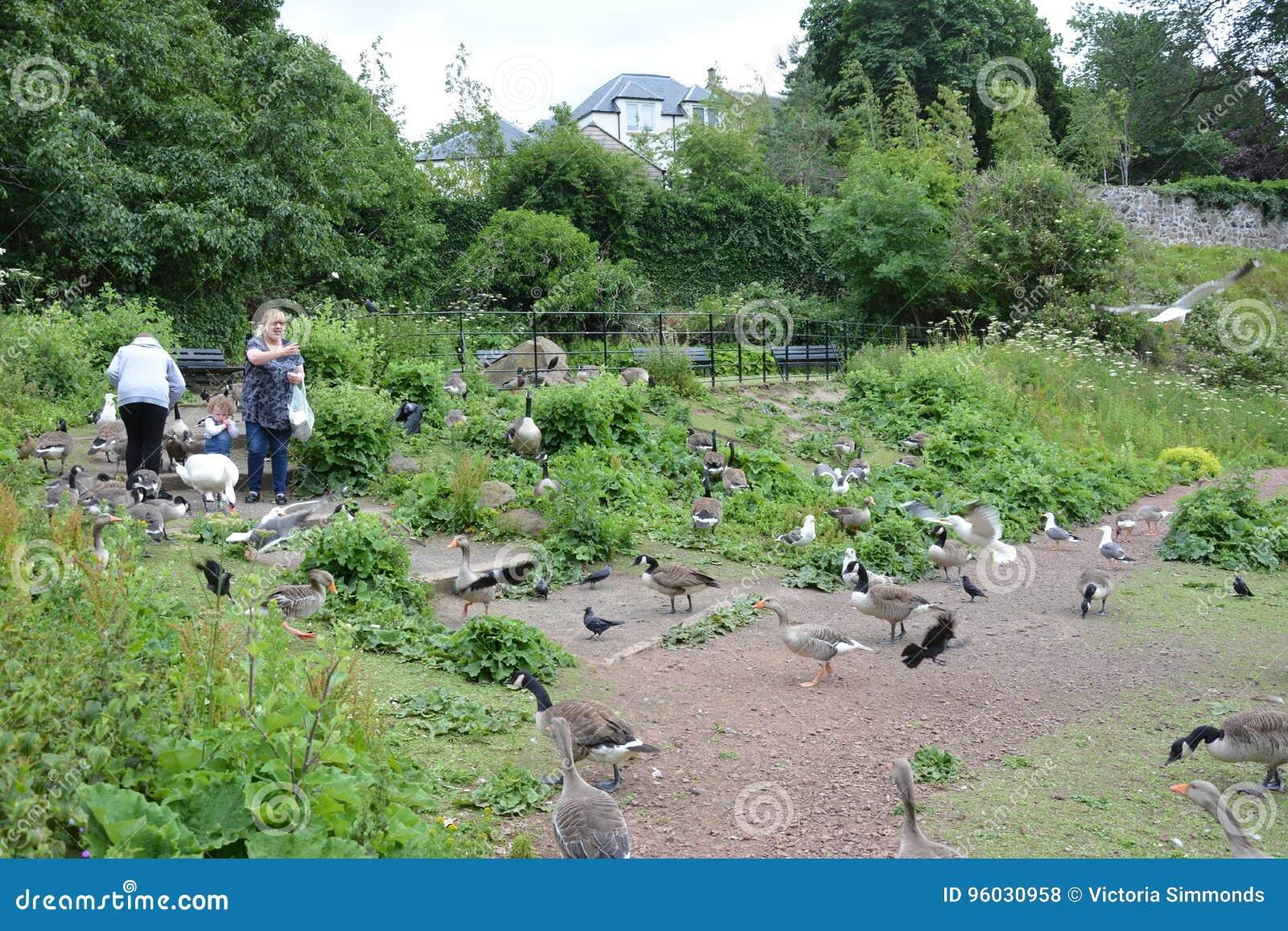 Rodzinny karmienie ptaki
