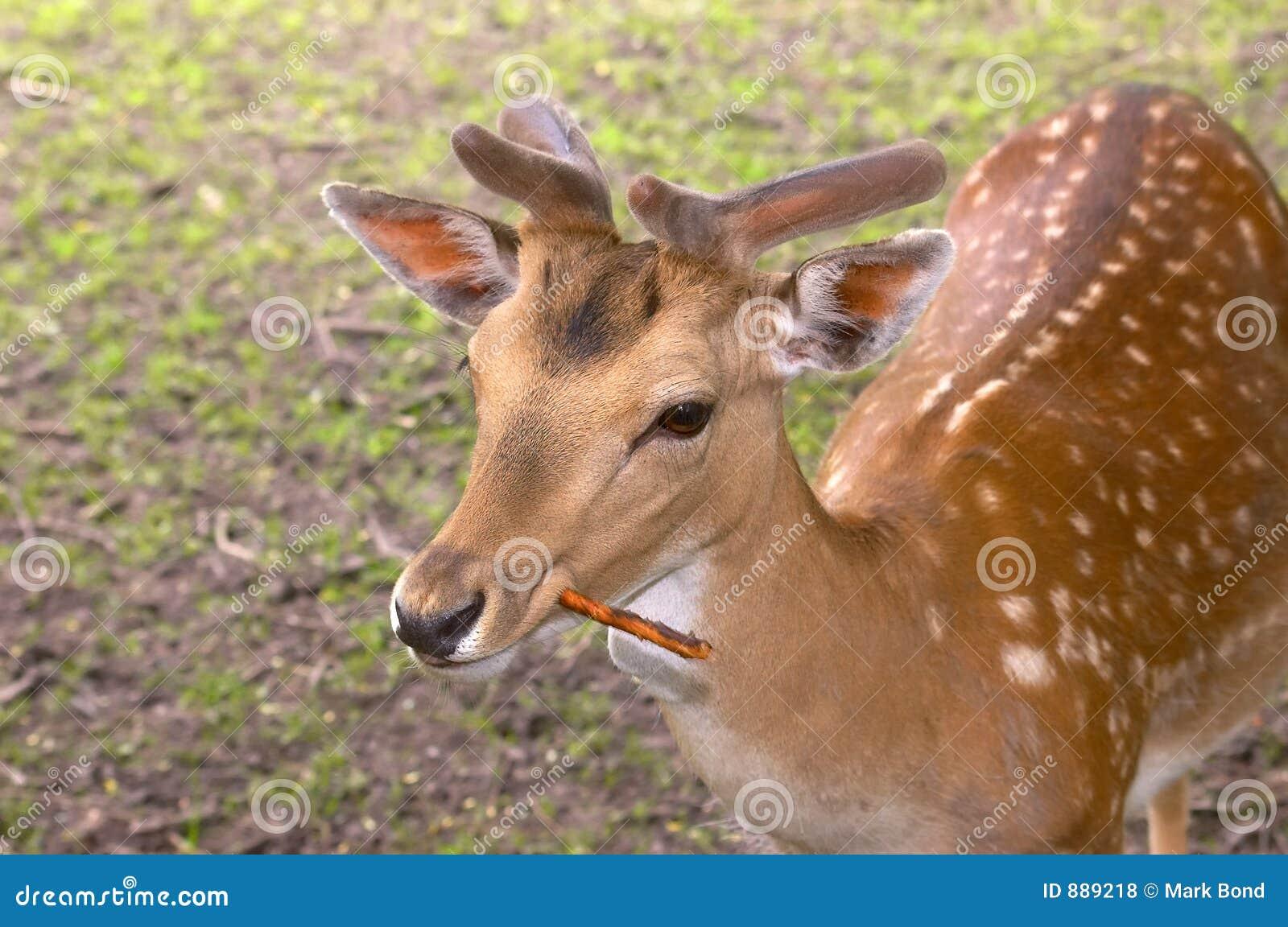 Dear Deer   NiF Hive