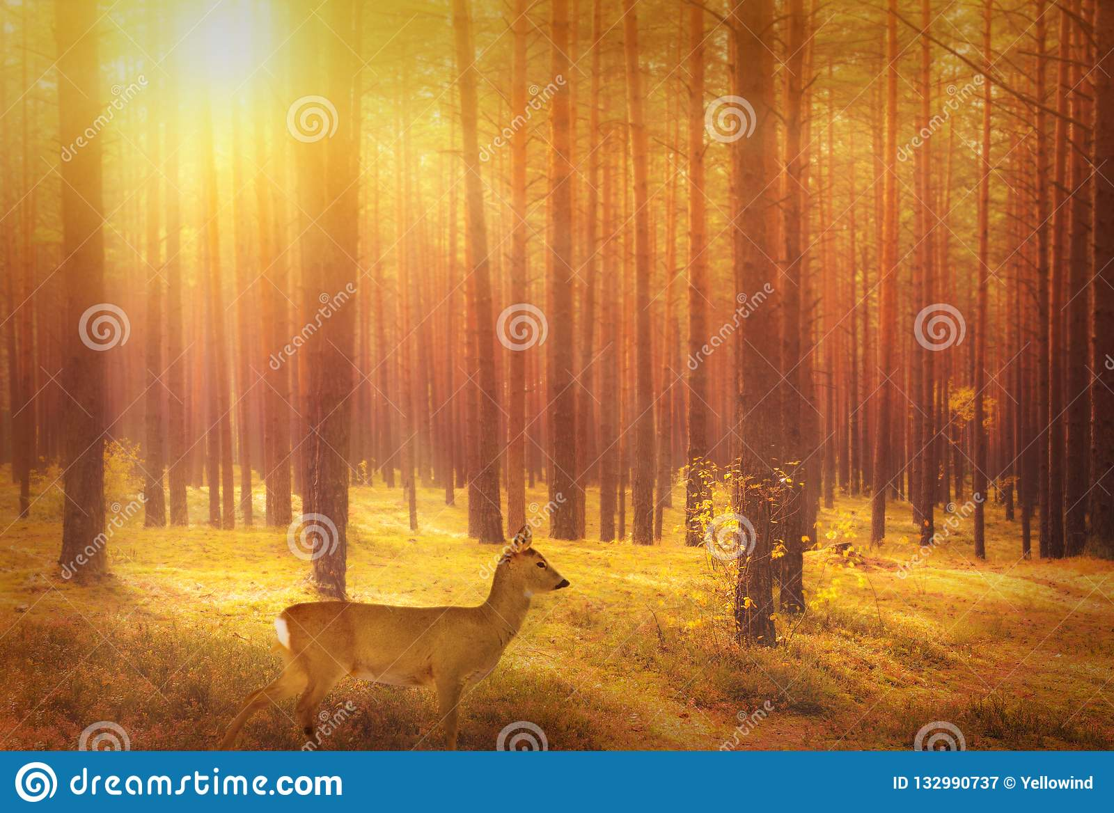Roe deer in forest at sunrise
