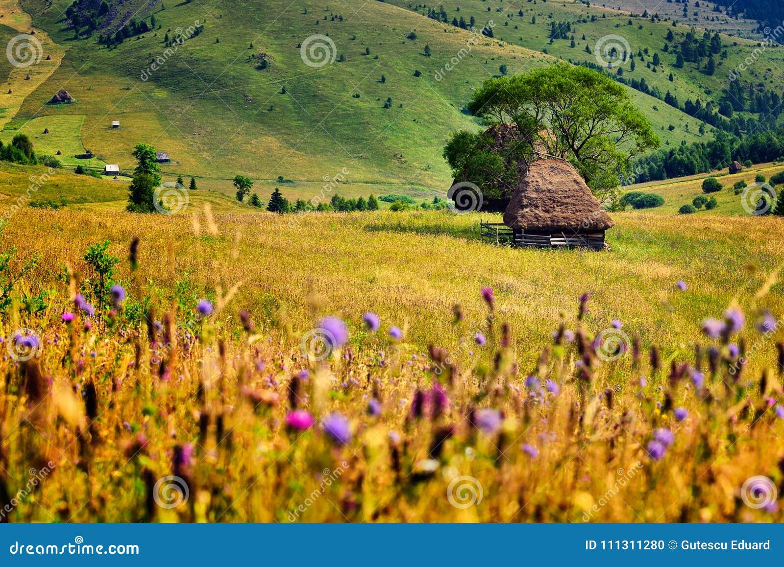 Roemenië, Apuseni-berg in de lente, traditionele huizen
