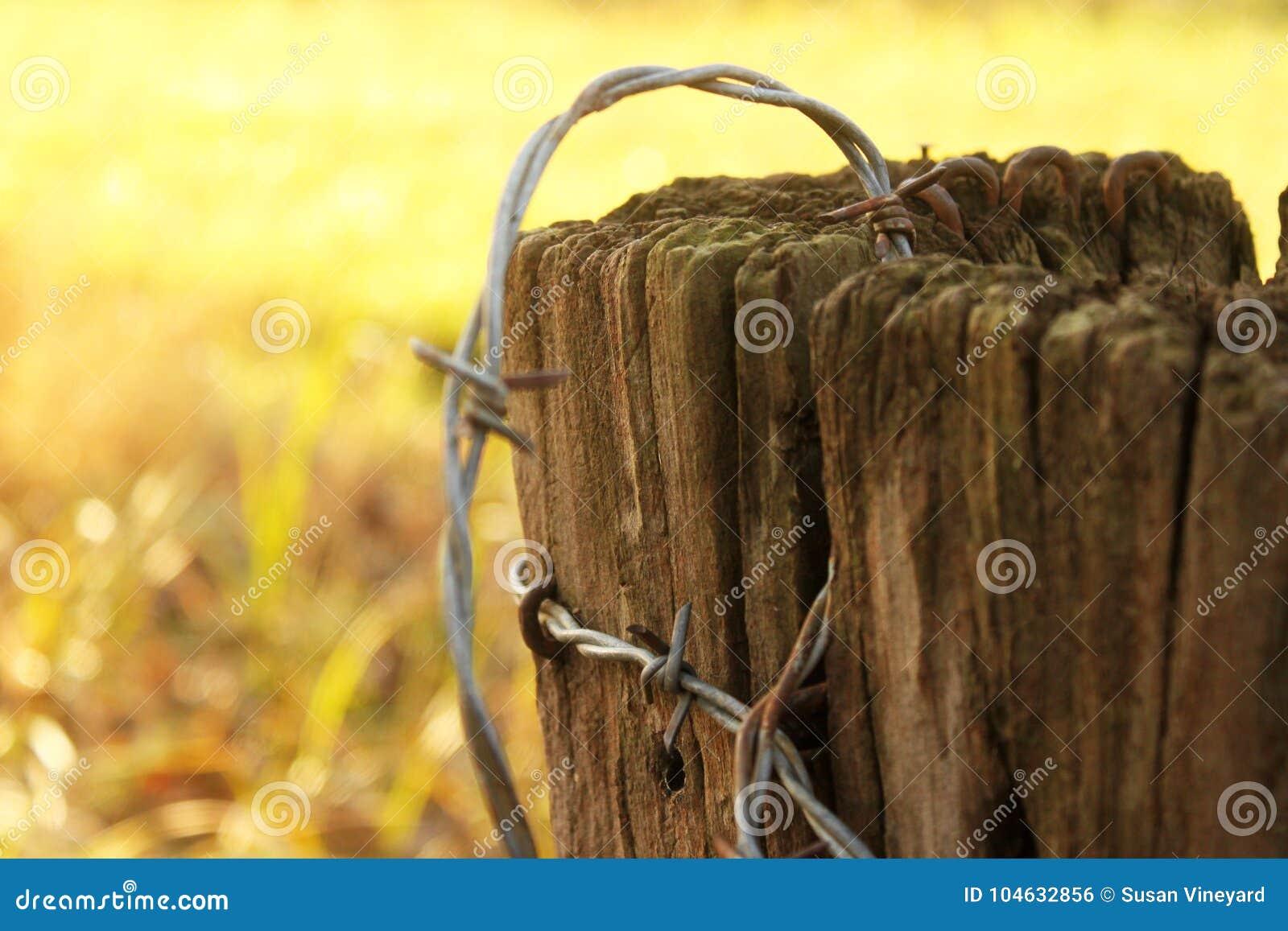 Download Roestig Prikkeldraad Op Oude Post Stock Foto - Afbeelding bestaande uit diepte, houten: 104632856