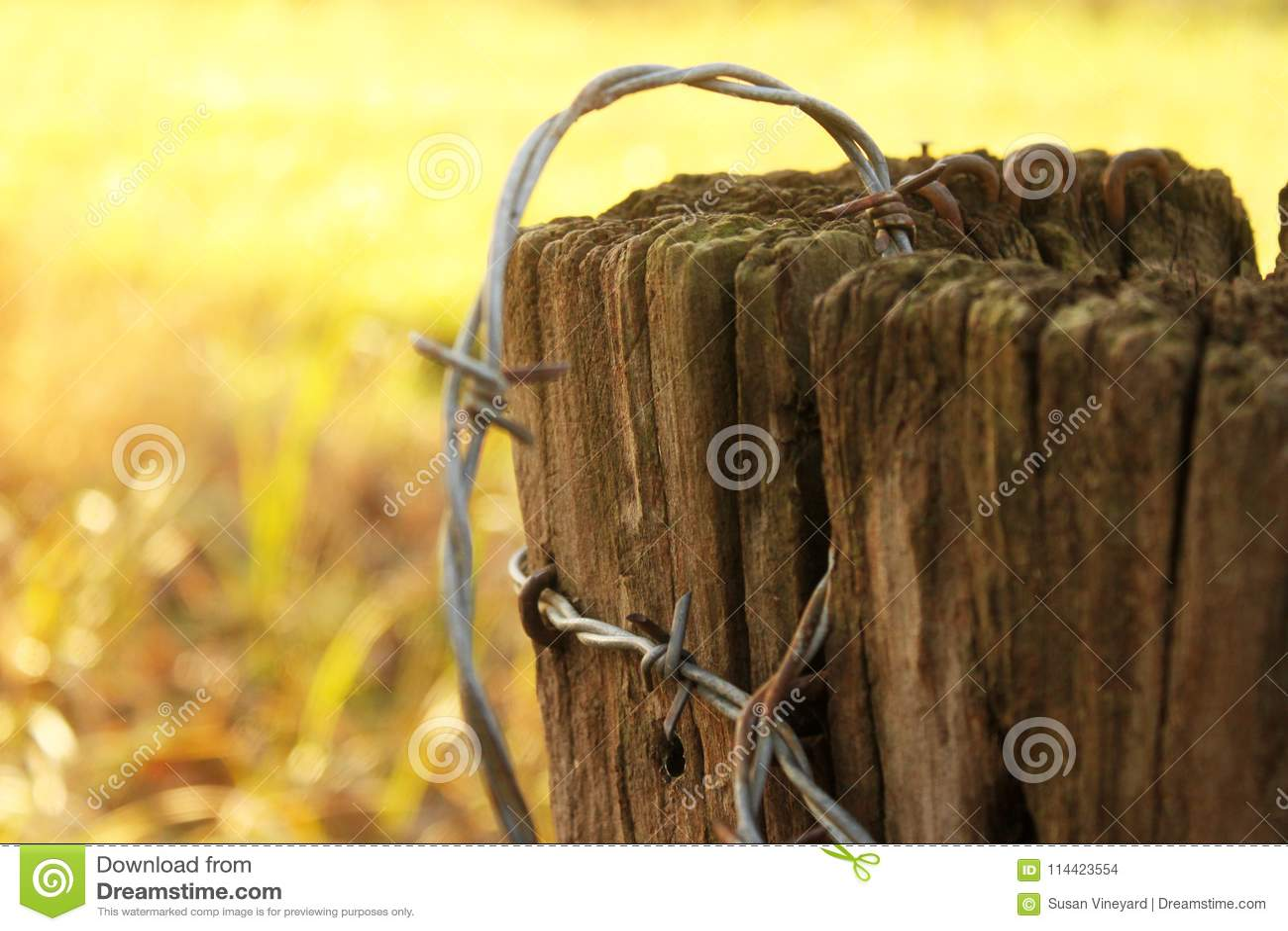 Roestig prikkeldraad op oude post - zeer ondiepe diepte van nadruk met de Herfst of de winter gele achtergrond