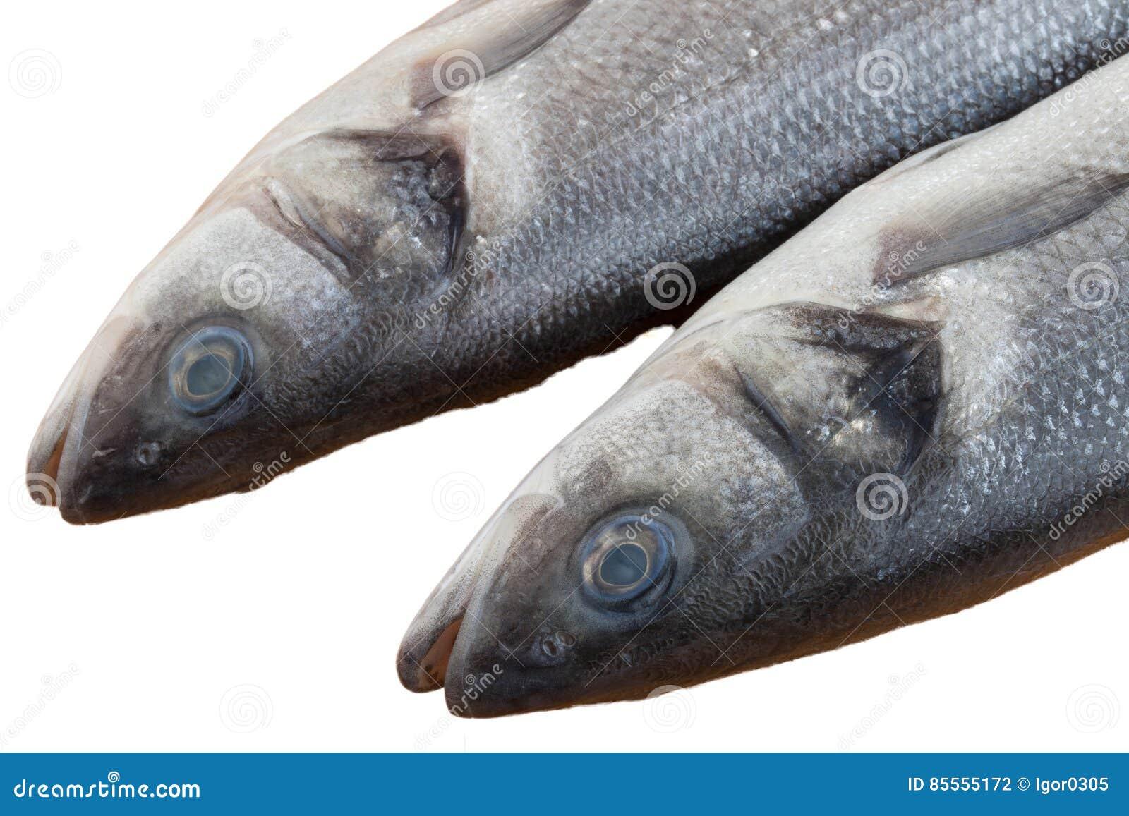 Rohe Seebarschfische