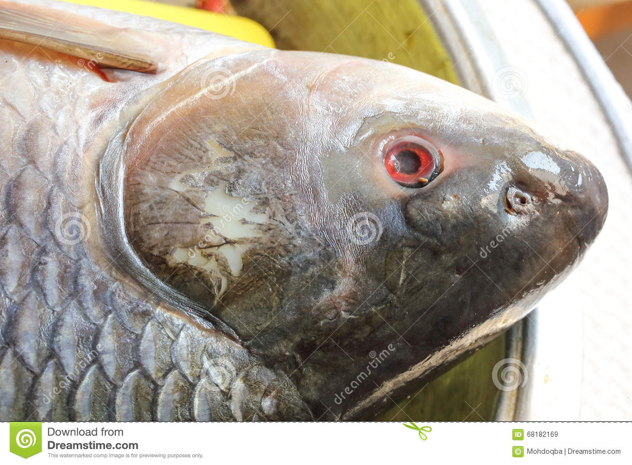 Rohu carb fish head stock photo image 68182169 for How many carbs in fish