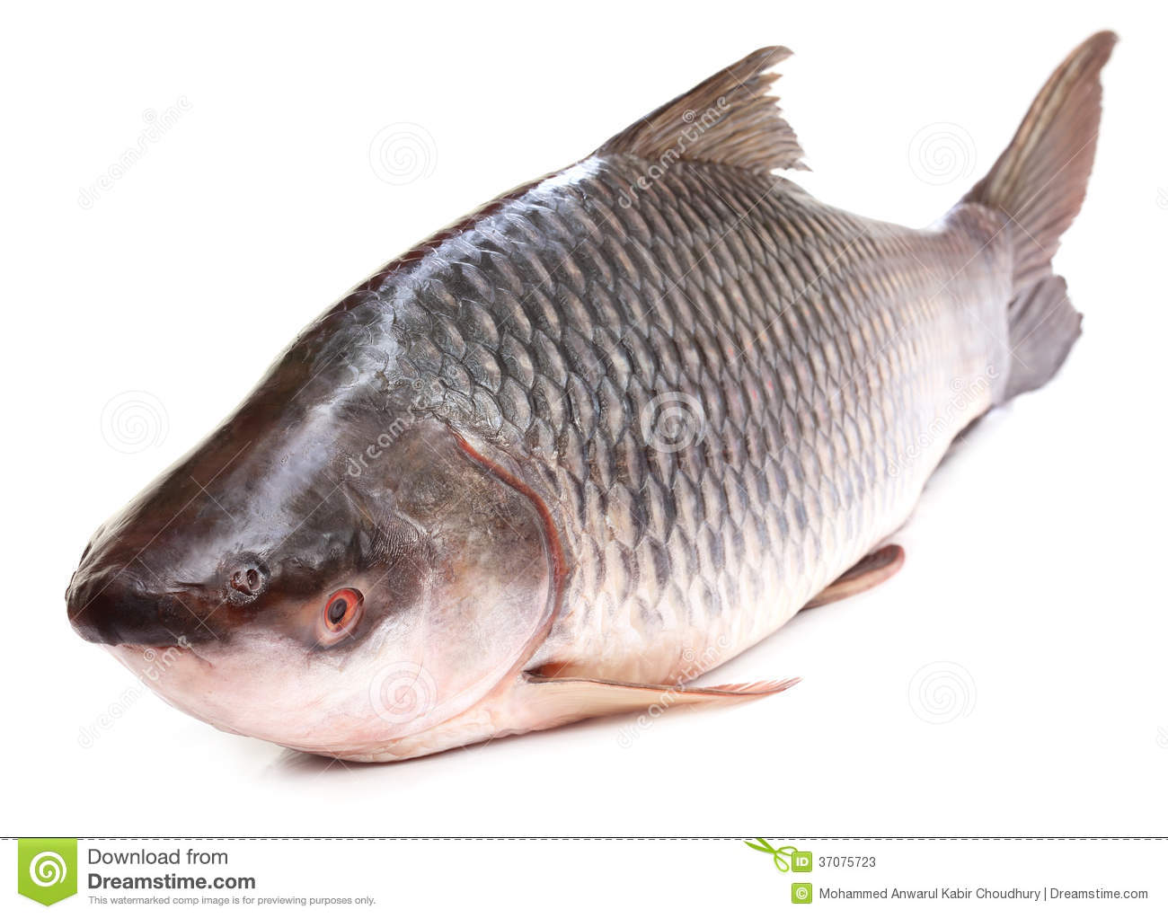 Rohu Or Rohit Fish Of Indian Subcontinent Stock Photos - Image ...