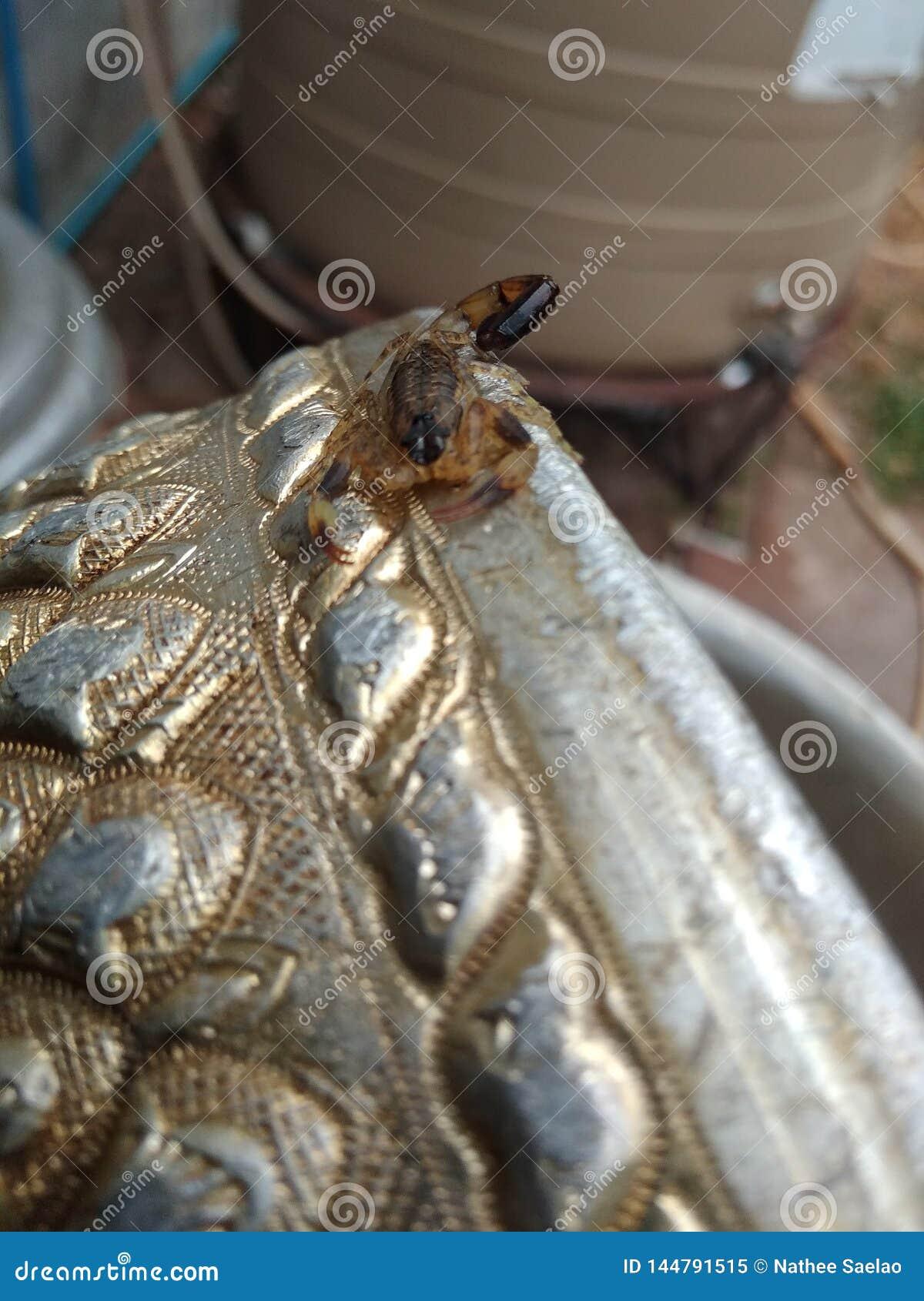 Roi de scorpion sur la cuvette argentée