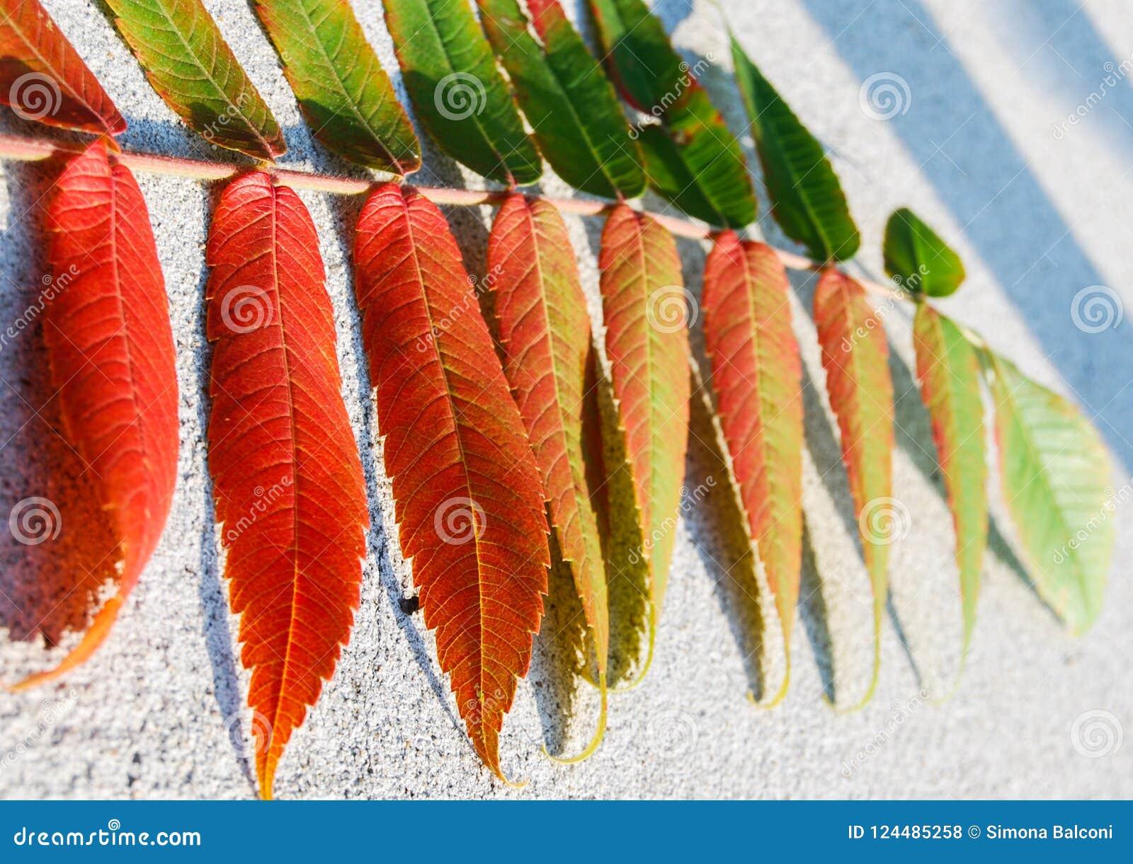 Rojo de torneado de la hoja verde