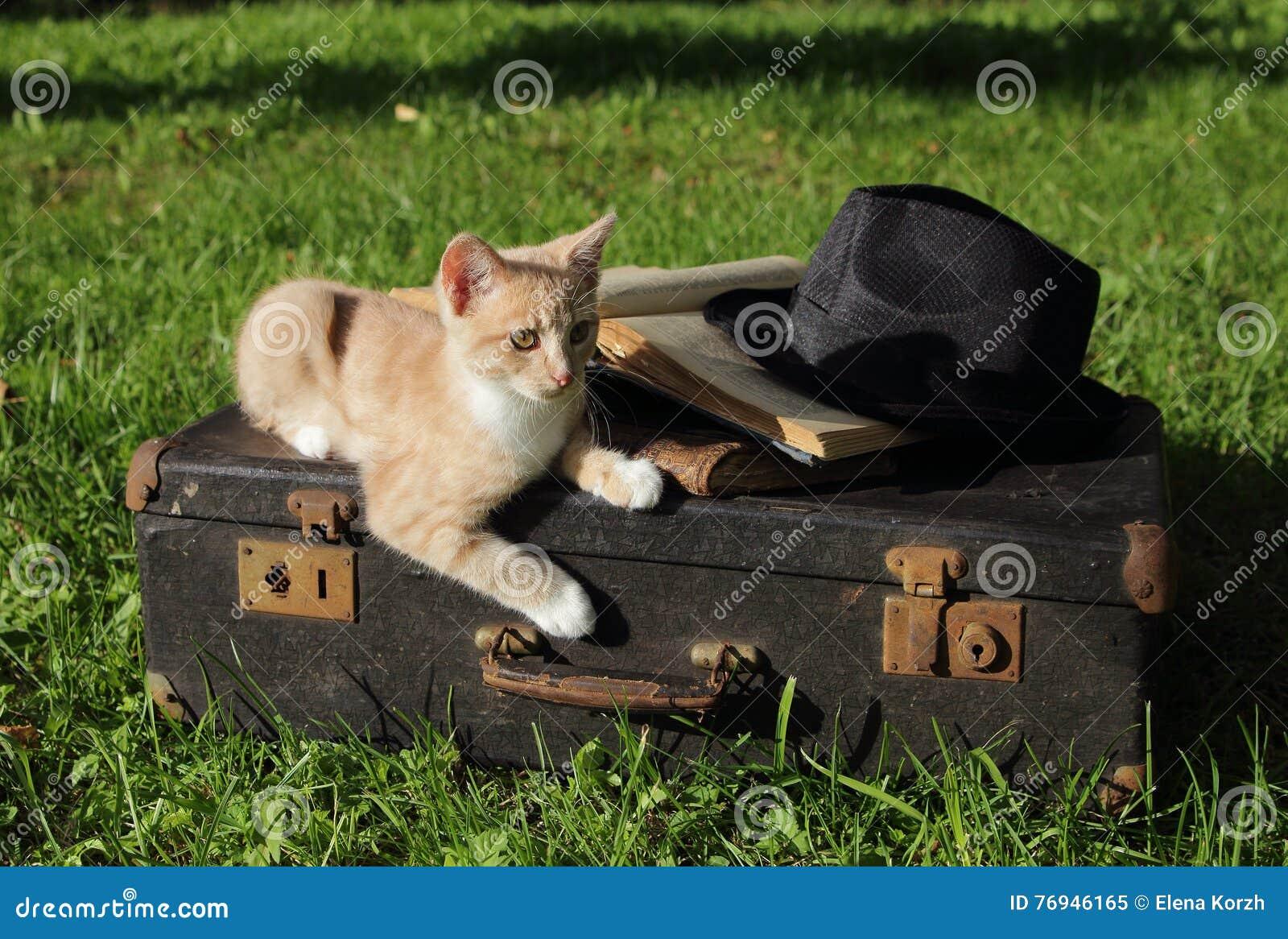 Rojo del gatito en una maleta vieja con libros y un sombrero