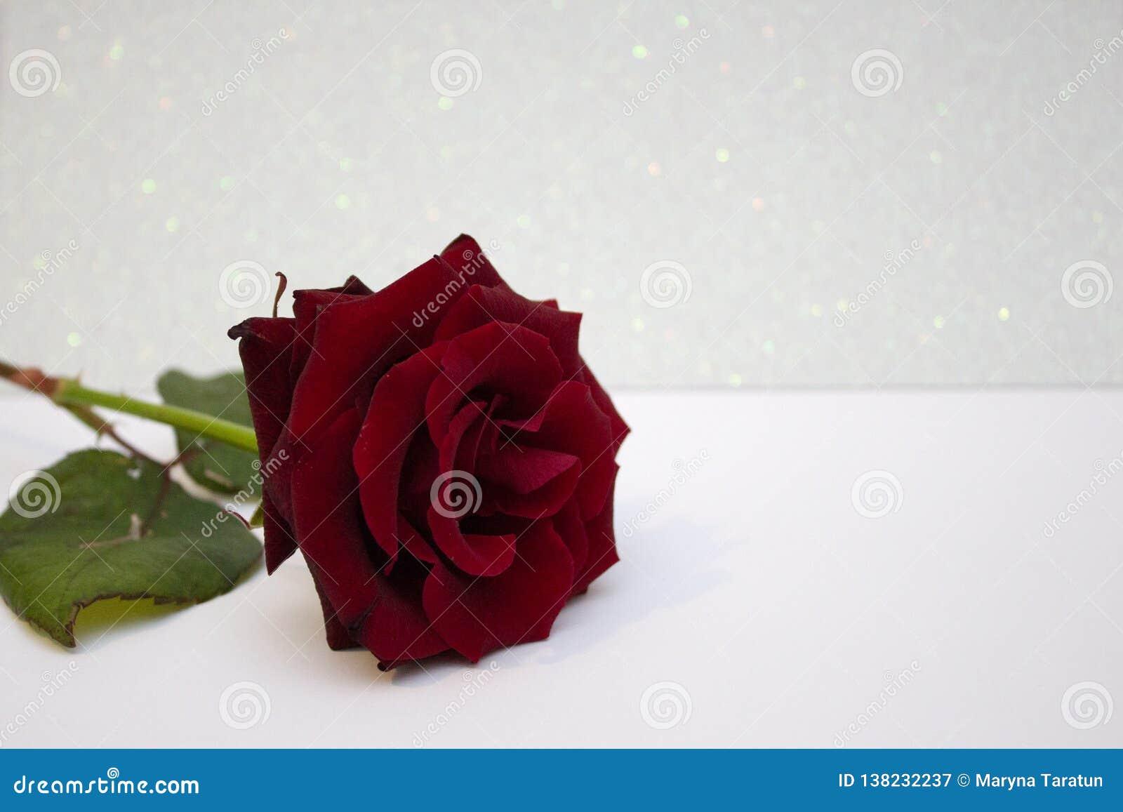 Rojo subió el fondo borroso del bokeh Tarjeta del día de San Valentín o fondo el casarse, tarjeta del día de tarjeta del día de S