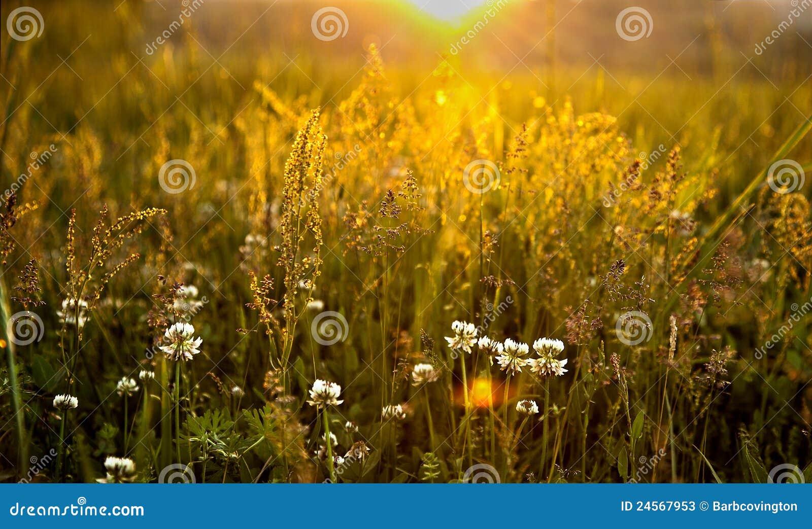 Rokerige het grasgebieden van de Inham van Cades van Bergen