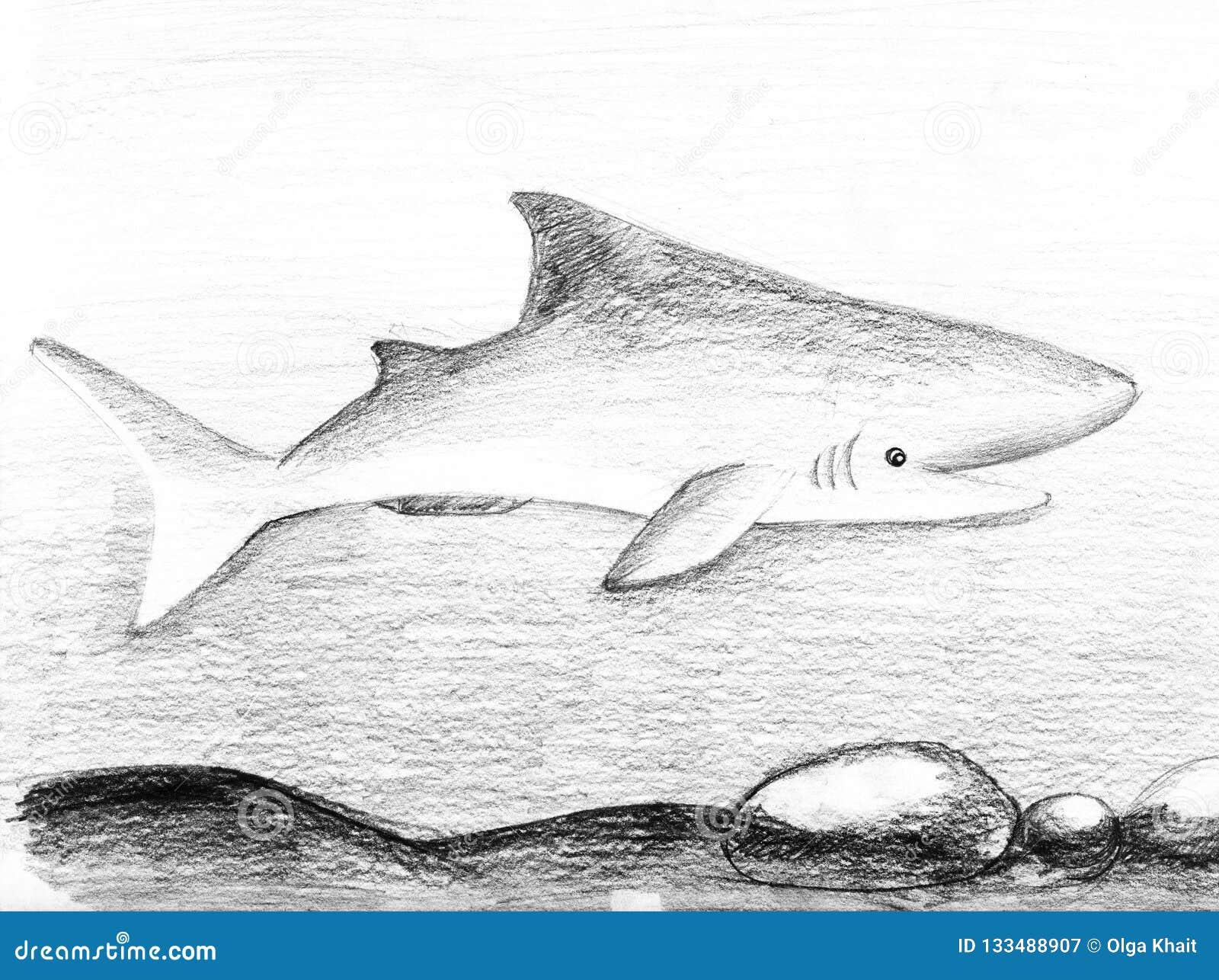 Rolig barnhaj Blyertspennor skissar illustrationen på ett papper