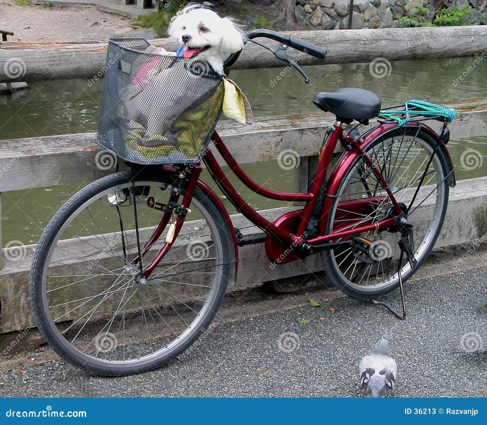 Rolig cykel