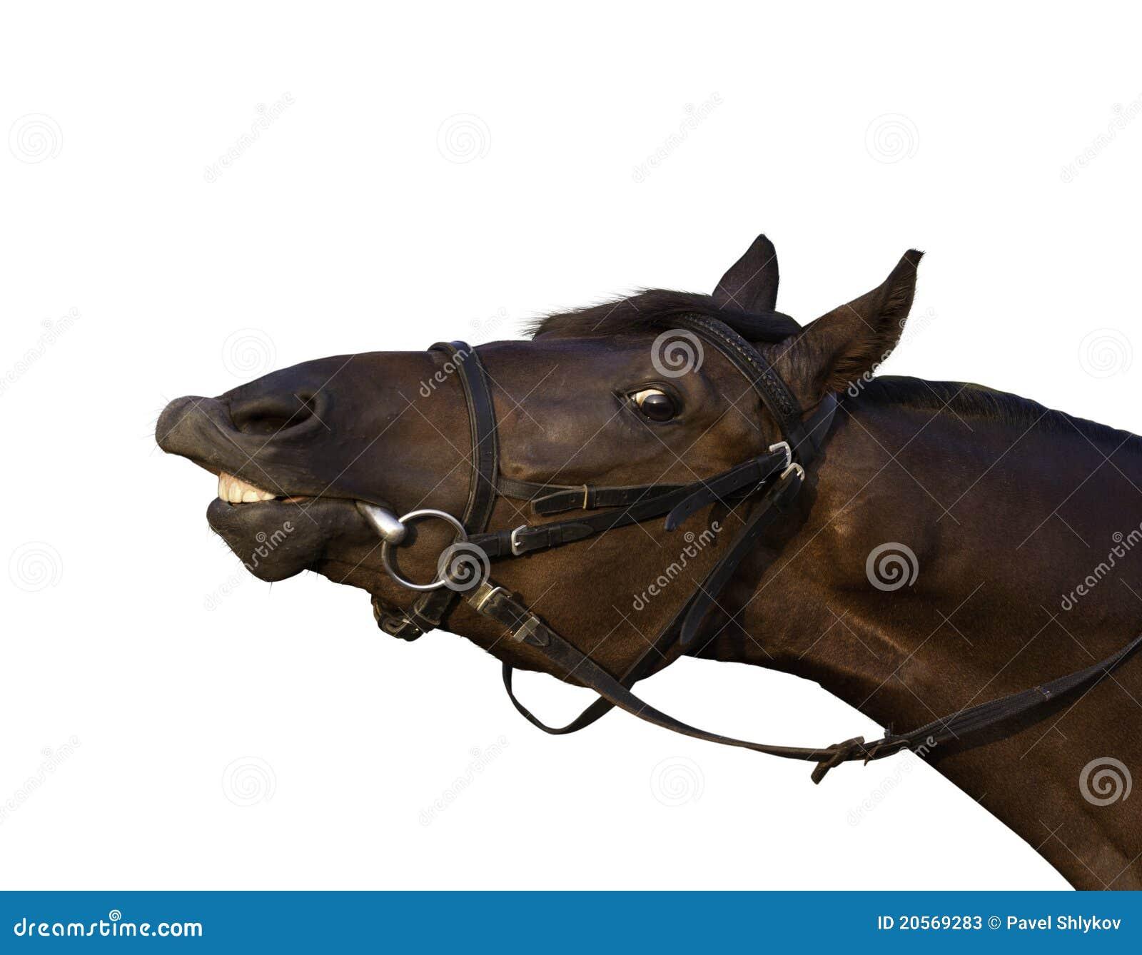 Rolig hästsolbränna