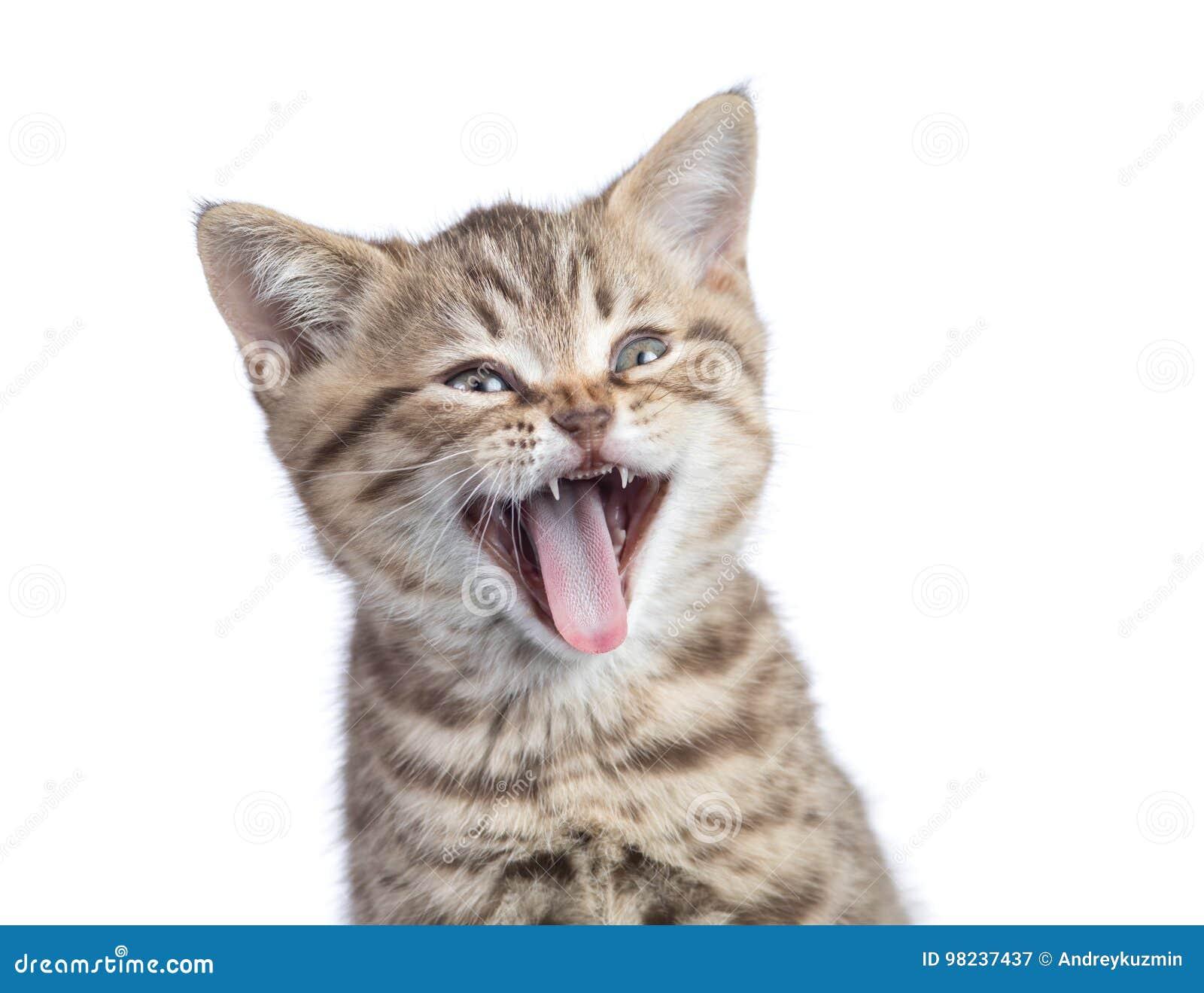Rolig isolerad kattstående