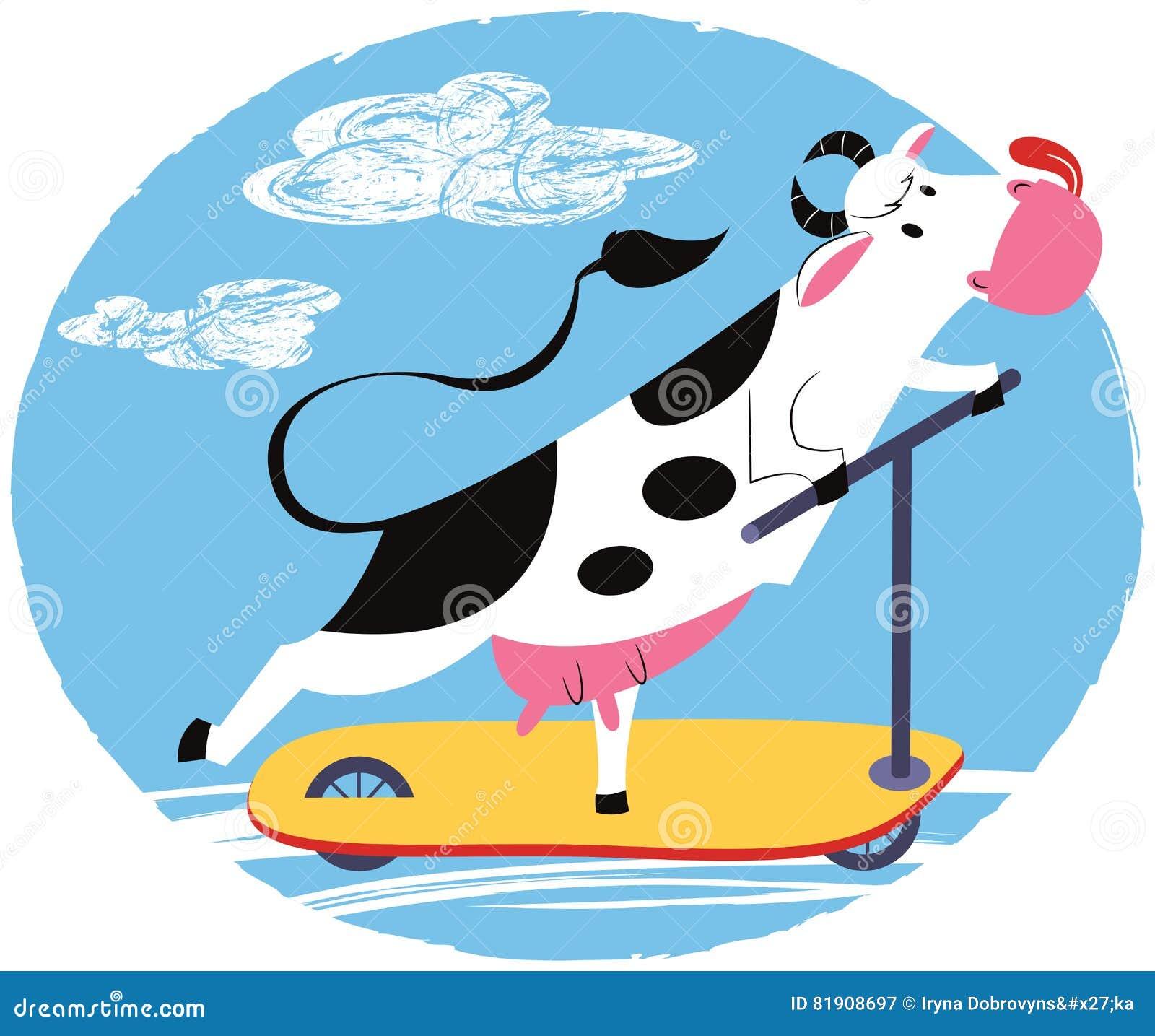 Rolig ko som rider en sparkcykel