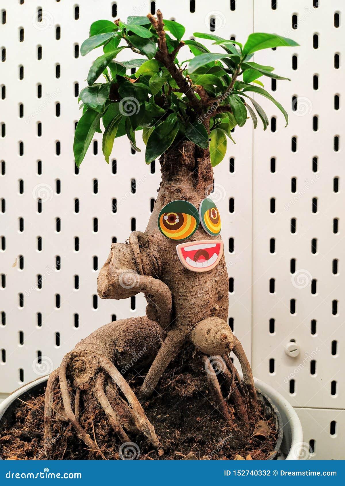 Rolig växt med den stora ögon och munnen Gräsplan sida-som hår som är hairsty