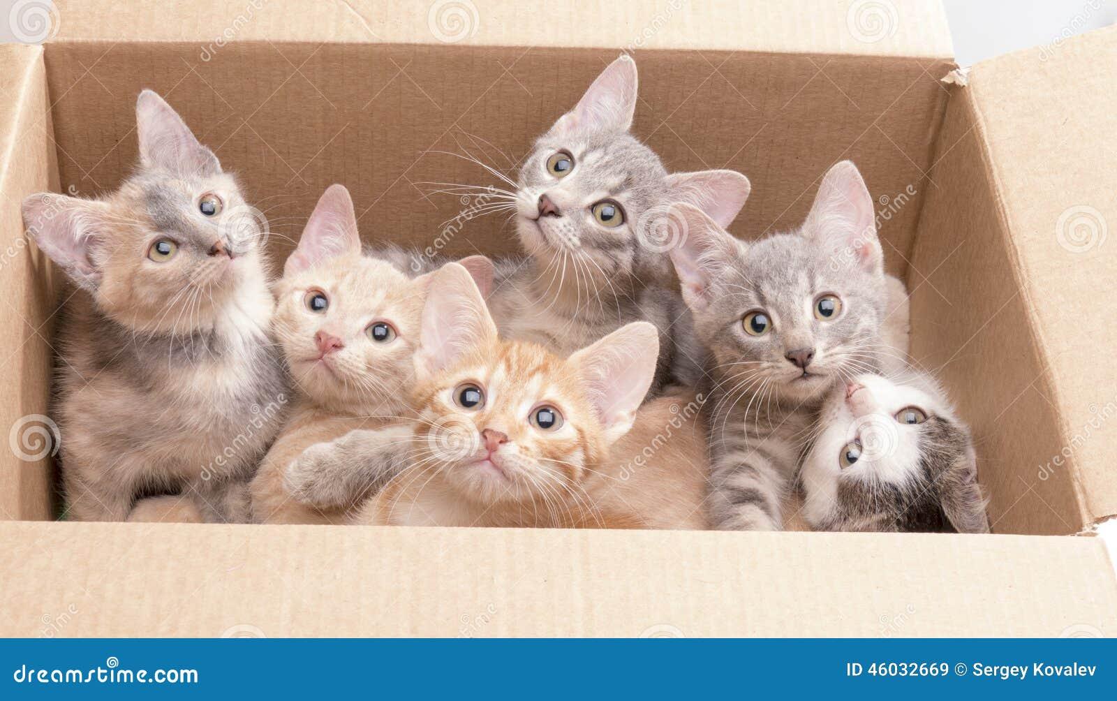 Roliga små kattungar i en ask