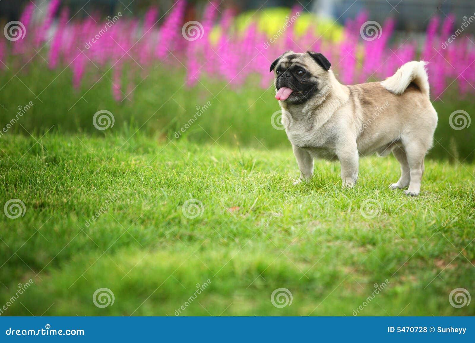 Roligt husdjur för hund
