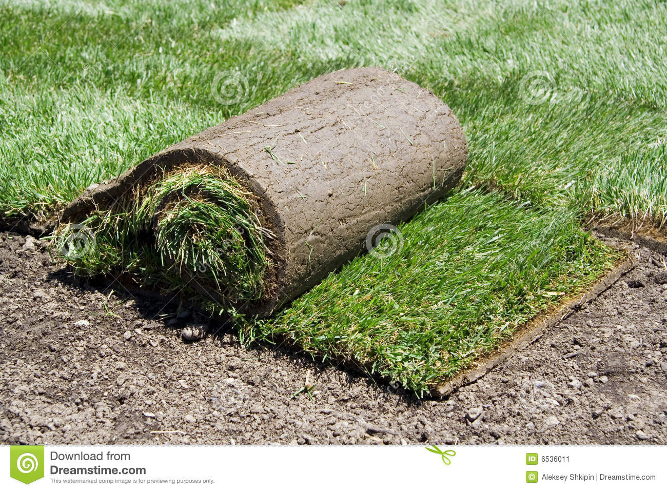 Roll Of Sod And Green Grass Stock Image Image 6536011
