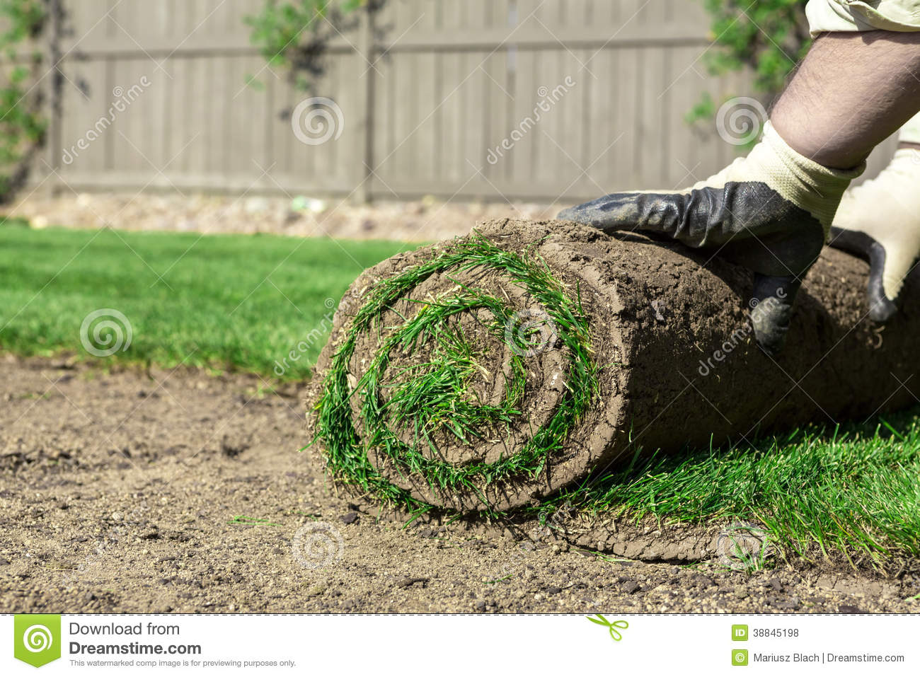 Roll of sod