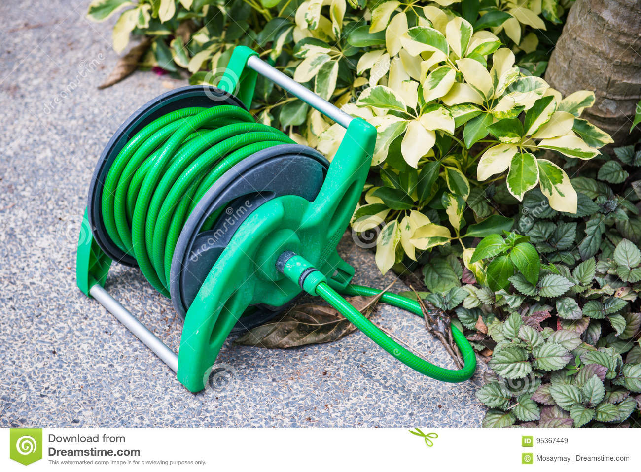 Roll the watering hose in the garden