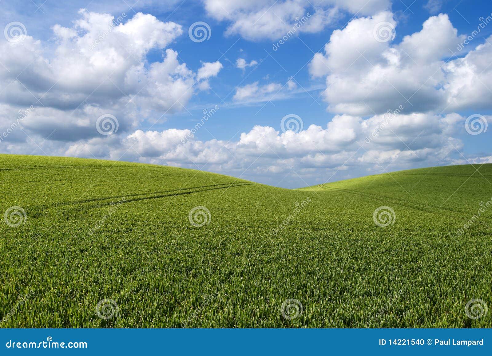 rolling heuvellandschap stock foto afbeelding bestaande uit gras 14221540. Black Bedroom Furniture Sets. Home Design Ideas