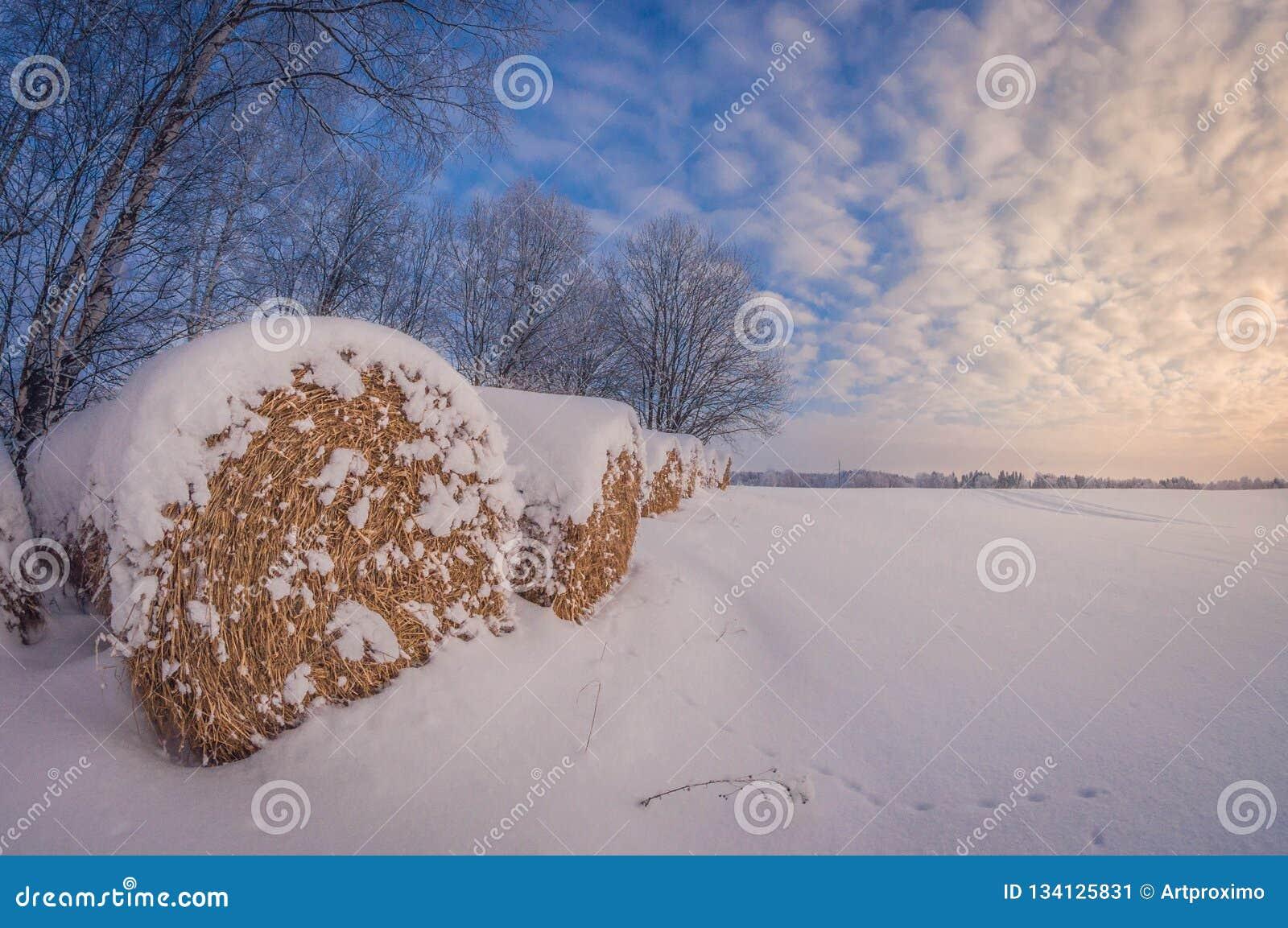 Rolls лож сена в поле в зиме на заходе солнца