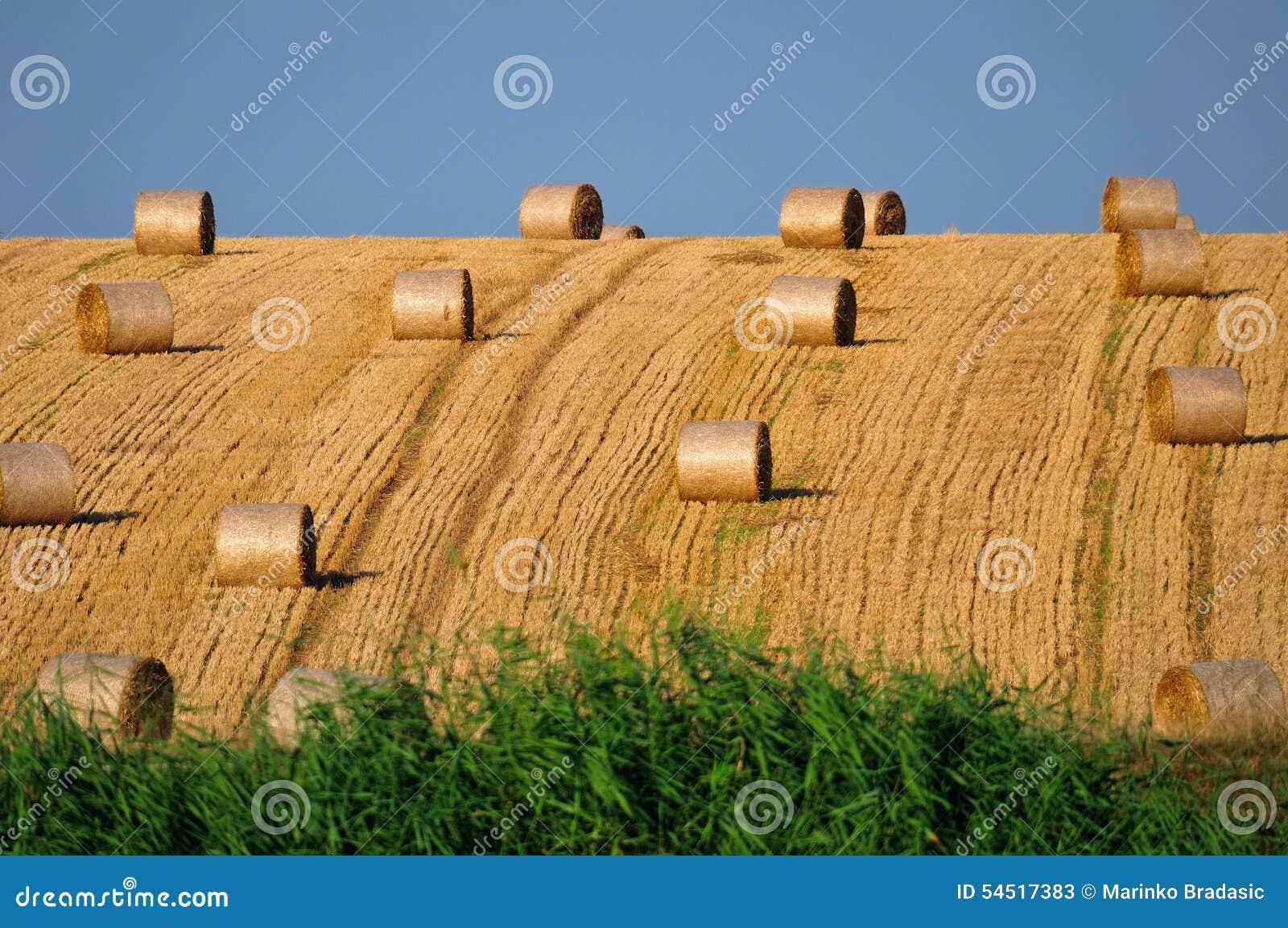 Rolls de paille sur le champ