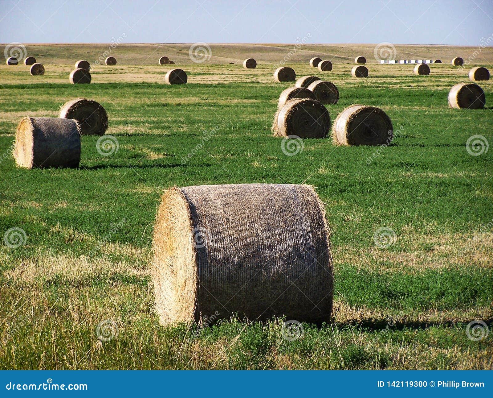 Rolls do feno no campo verde