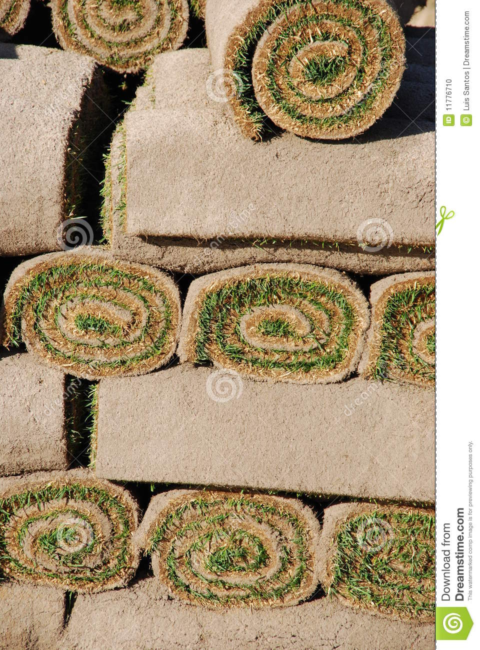 Rolls do sod (fundo)