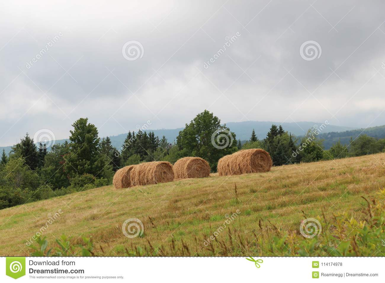 Rolls Of Hay On Hillside Stock Photo Image Of Mown 114174978