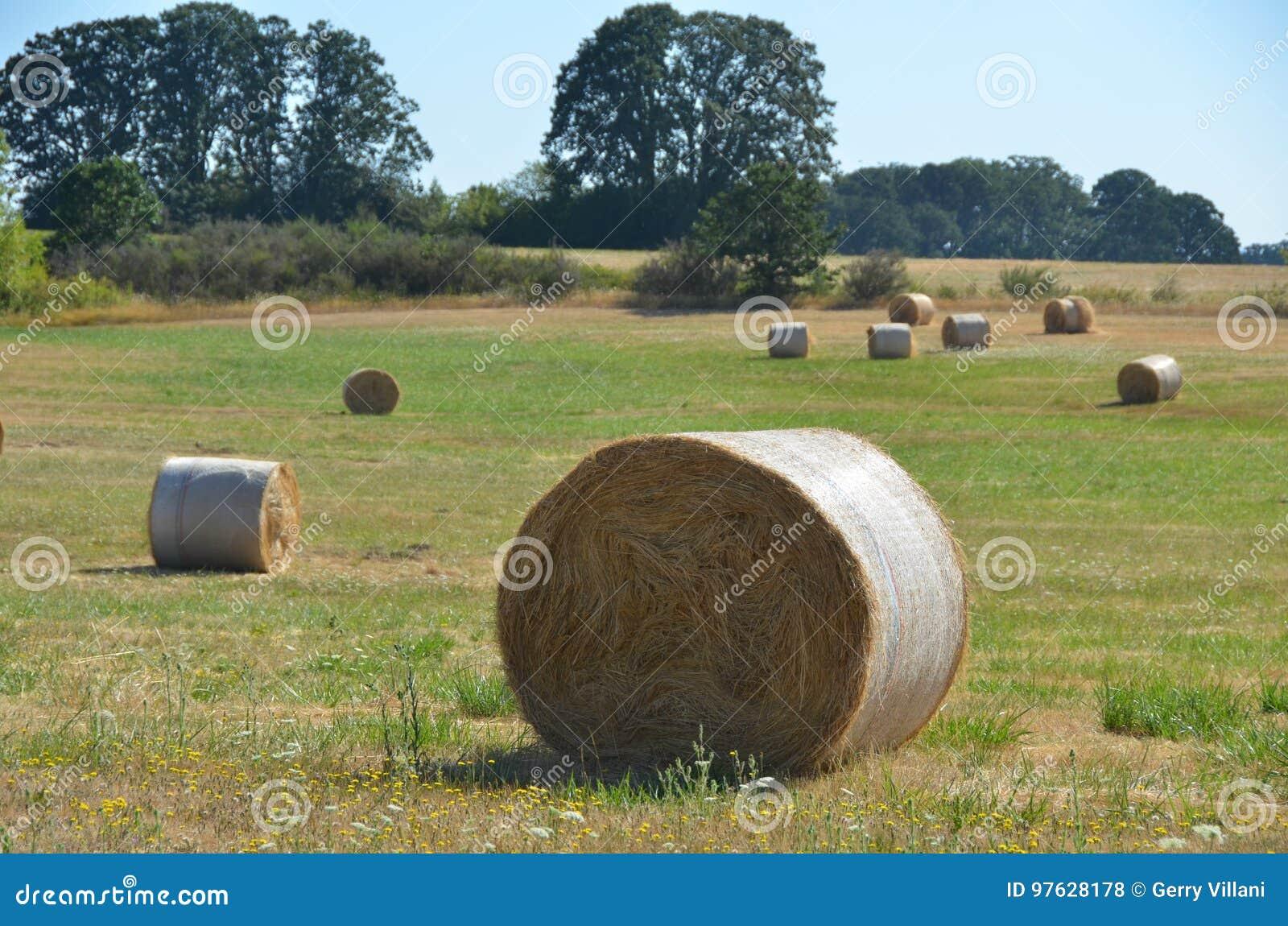 Rolls of Hay, Willamette Valley, Oregon