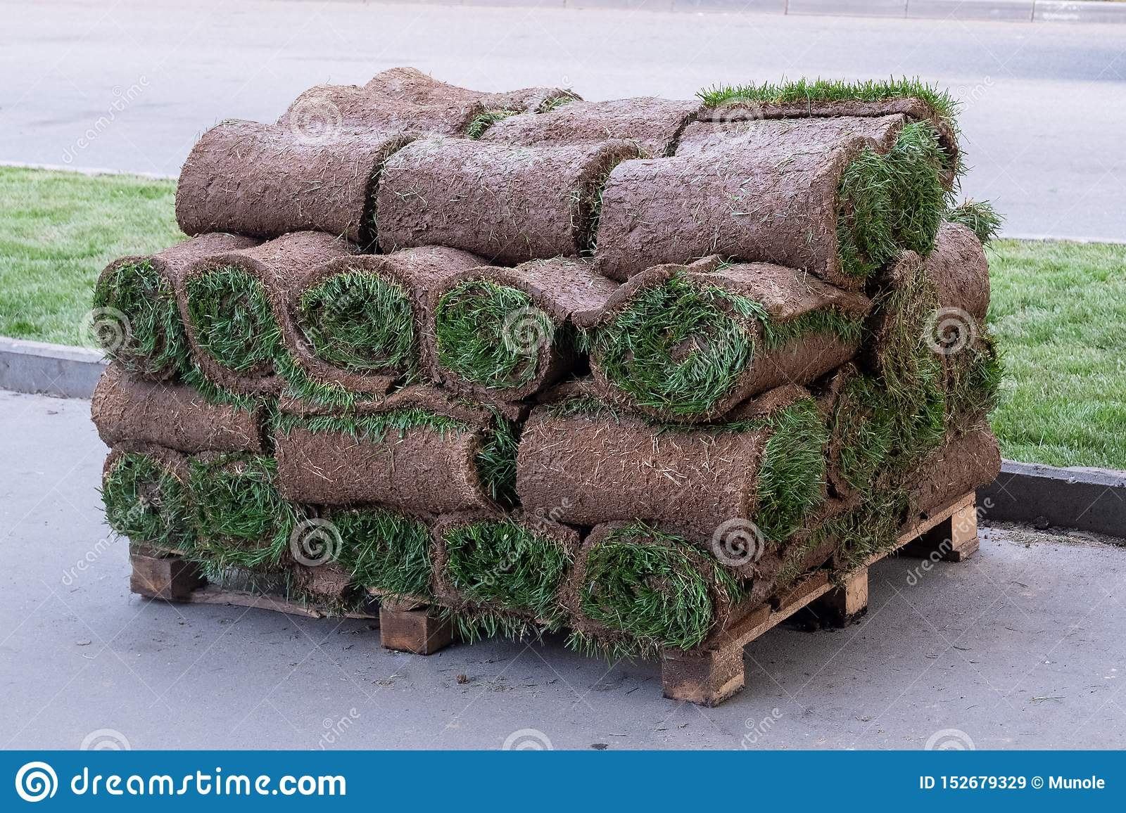 Rolls of natural lawn with the ground stacked on pallets in a stack.