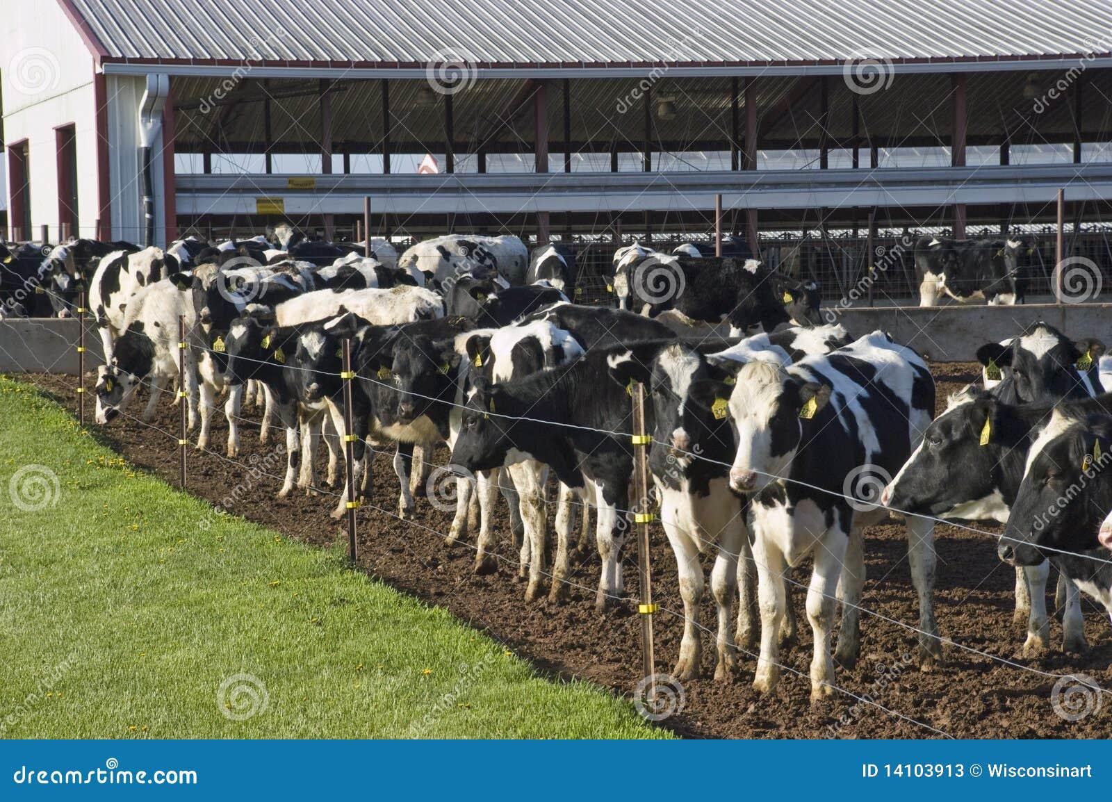 Rolnictwa biznesowy korporacyjny nabiału gospodarstwo rolne nowożytny