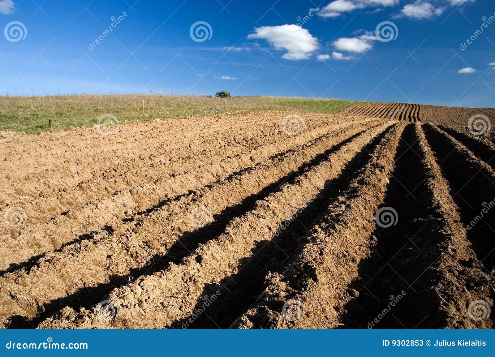 Rolnictwa pola krajobraz przeorzący