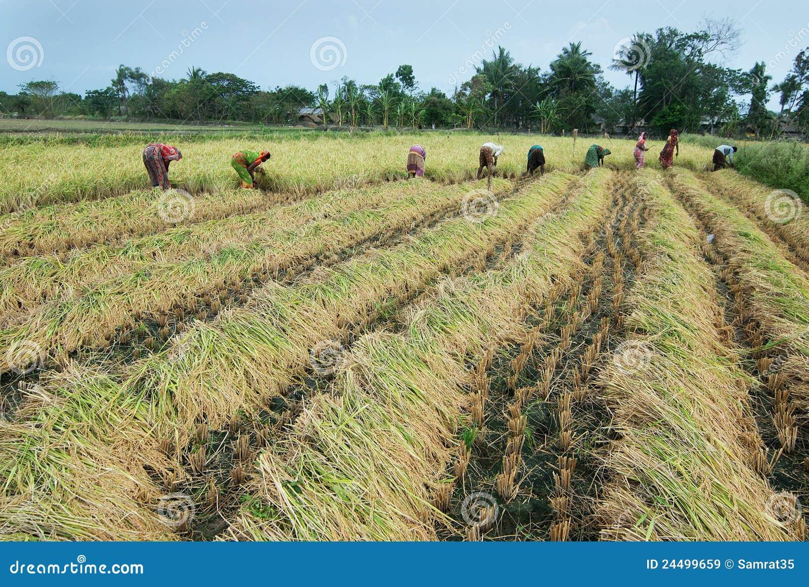 Rolnictwa zmiany klimat