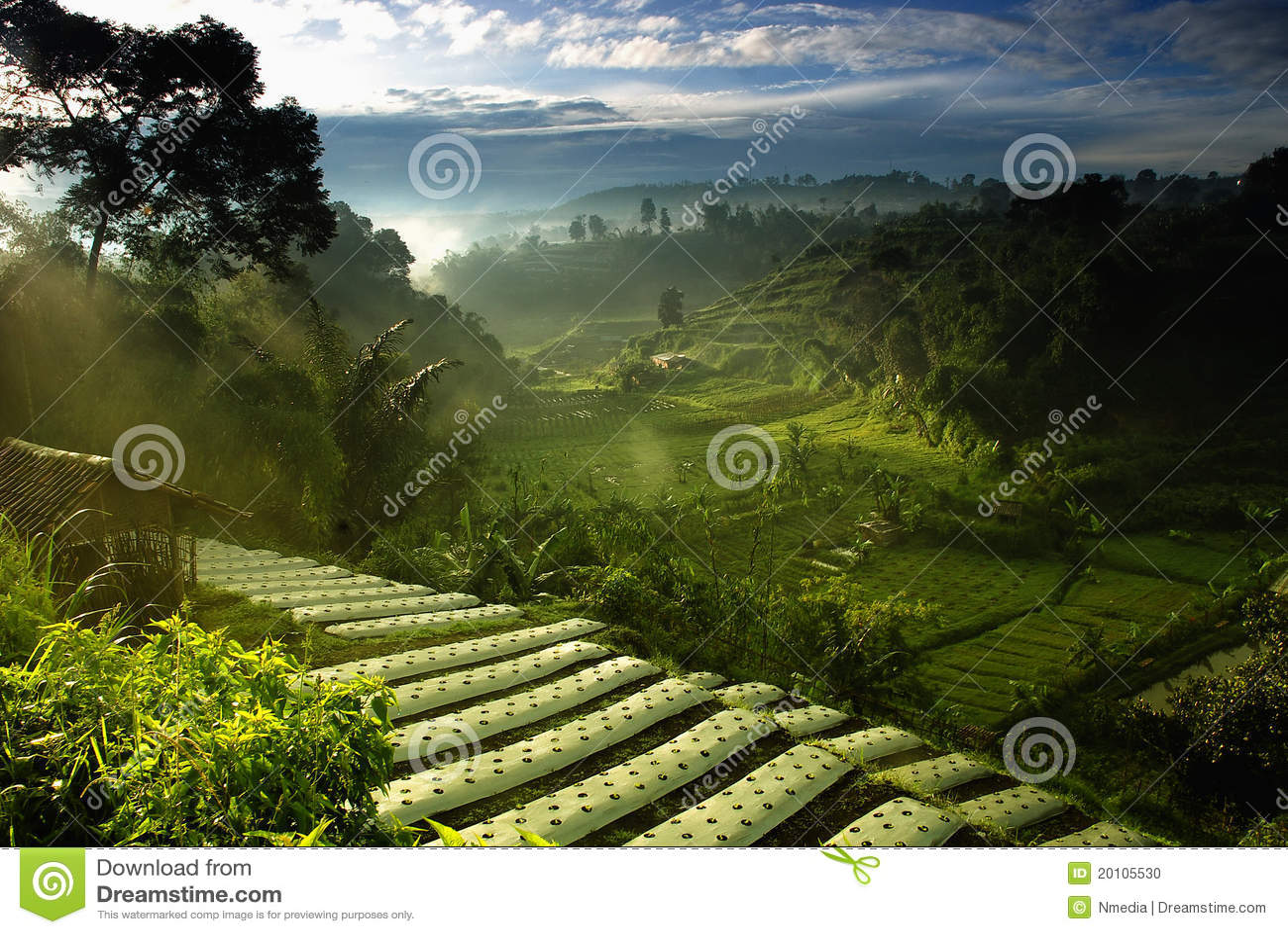 Rolnictwo Farmfield