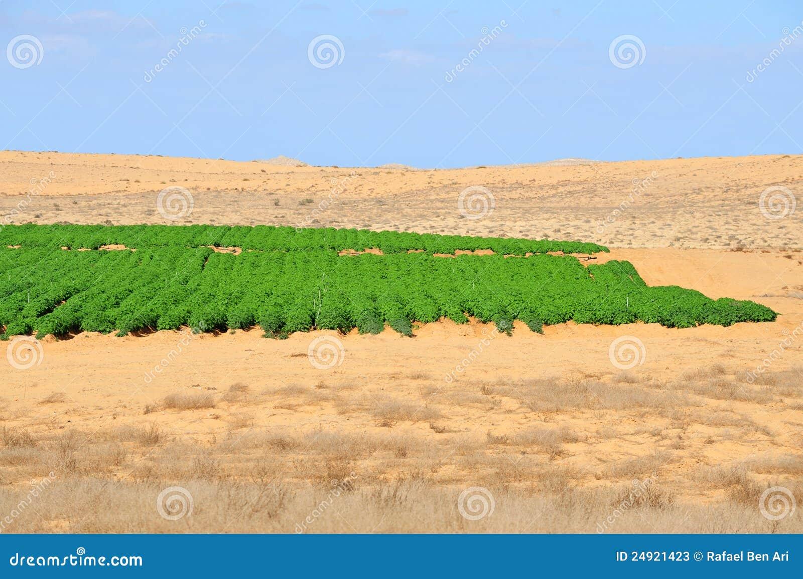 Rolnictwo - R w Pustyni