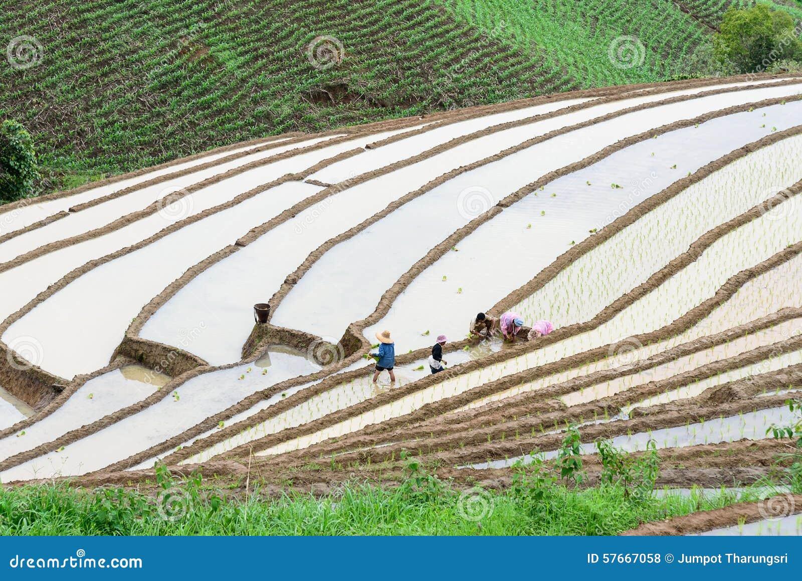 Rolnicy w ricterrace