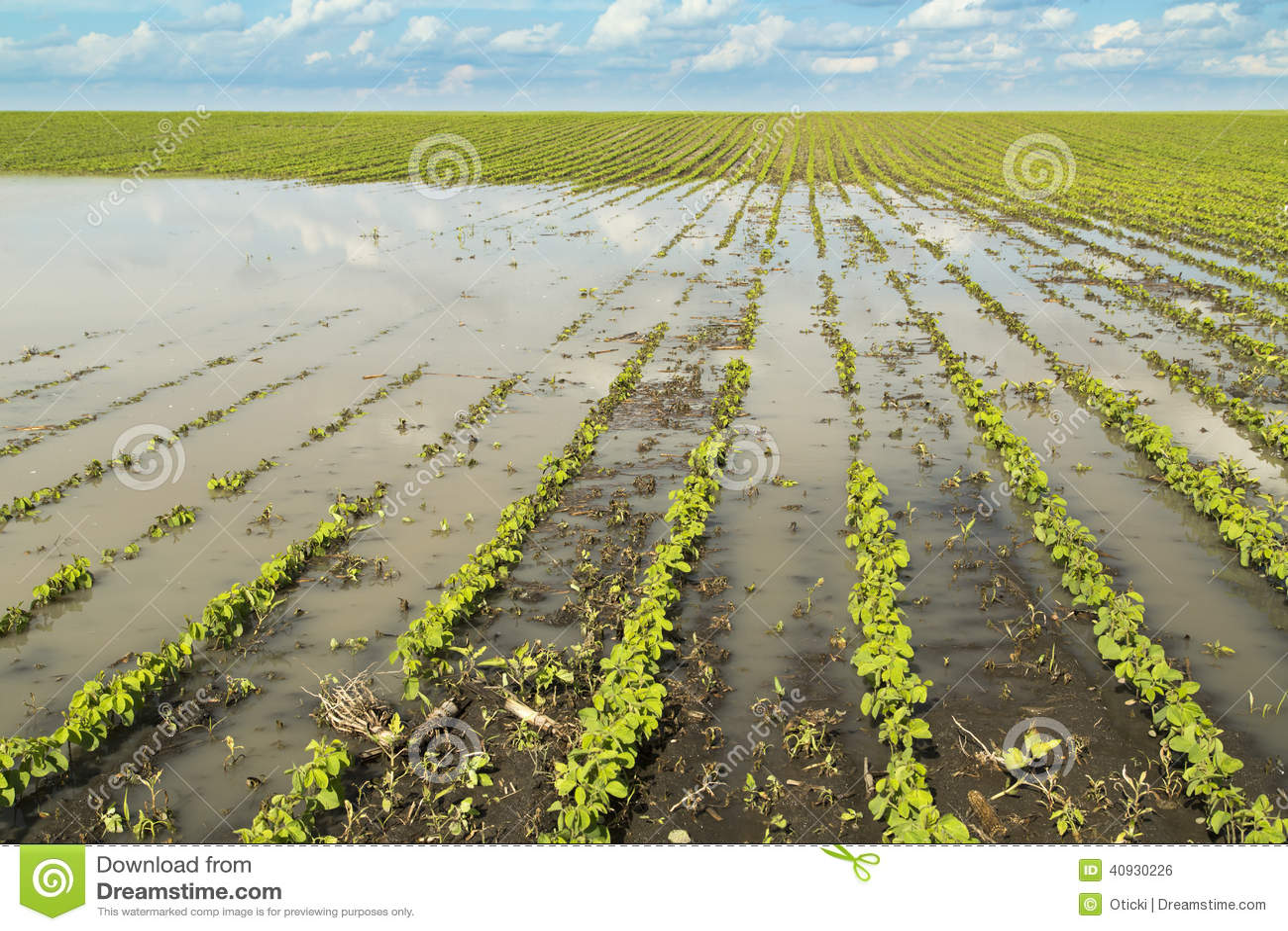 Rolnicza katastrofa, zalewająca soja