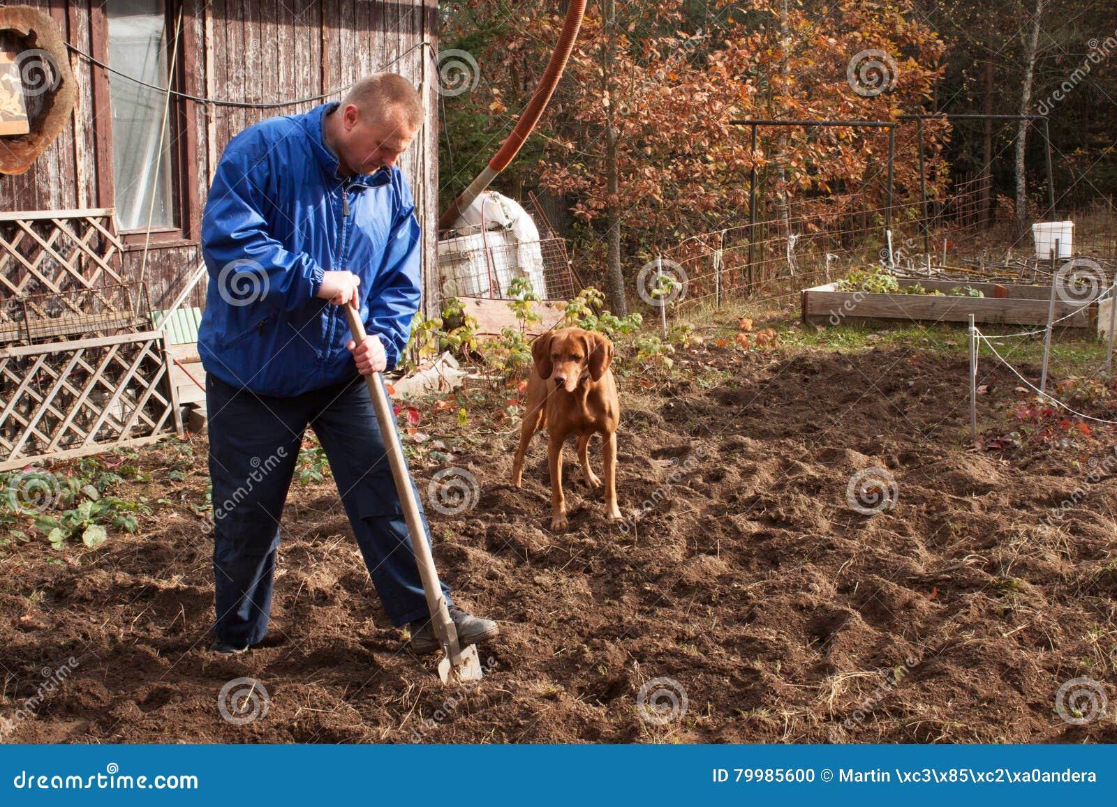 Rolnicza praca Portret mężczyzna głębienia ziemia z łopatą Jesień czyścić Średniorolny narządzanie ziemia dla zimy