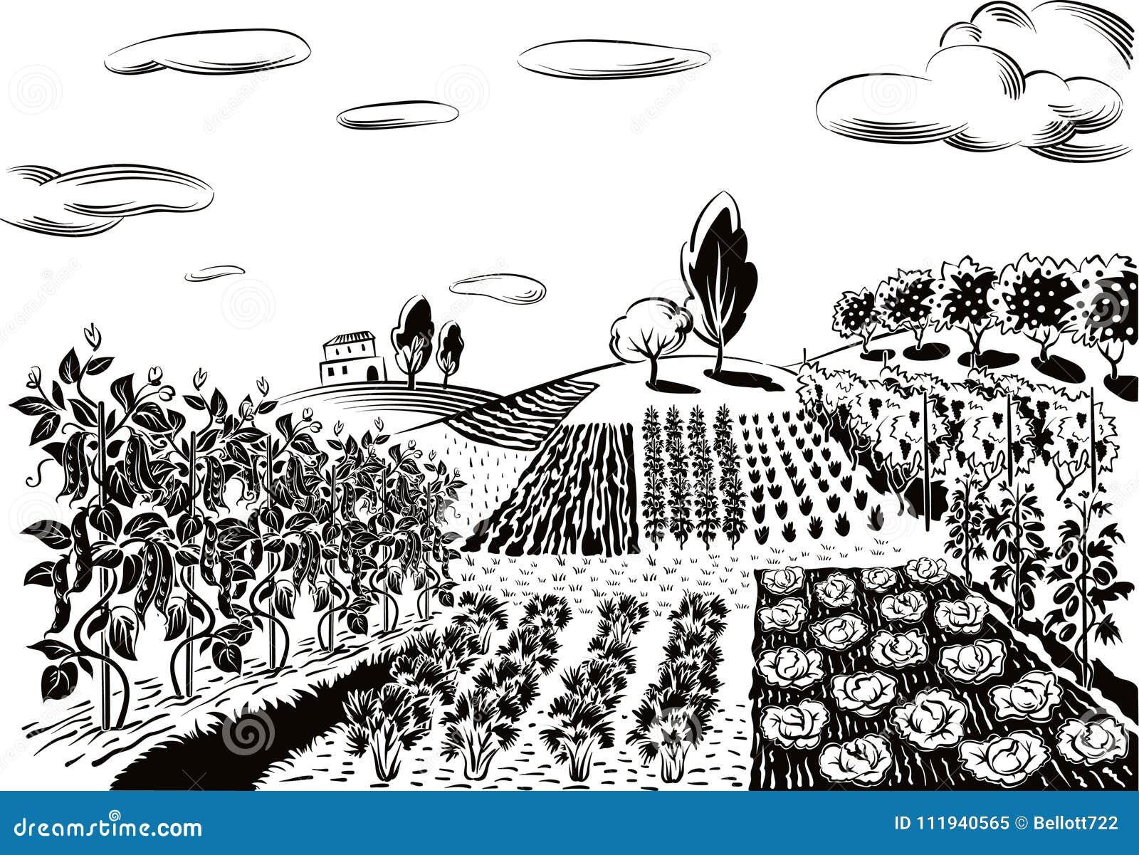 Rolniczy krajobraz, kultywujący z różnorodnymi warzywami