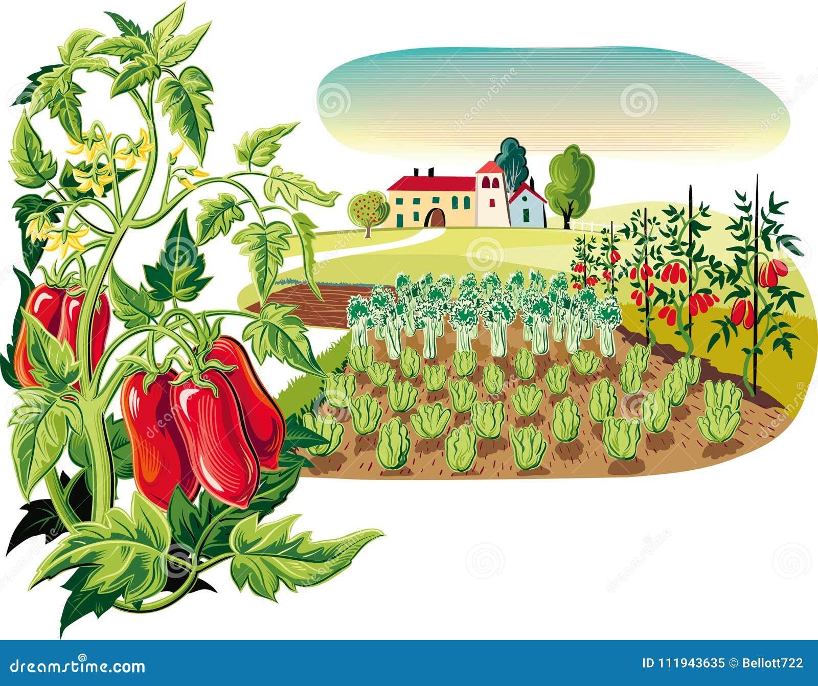 Rolniczy krajobraz z rośliną San Marzano pomidory,