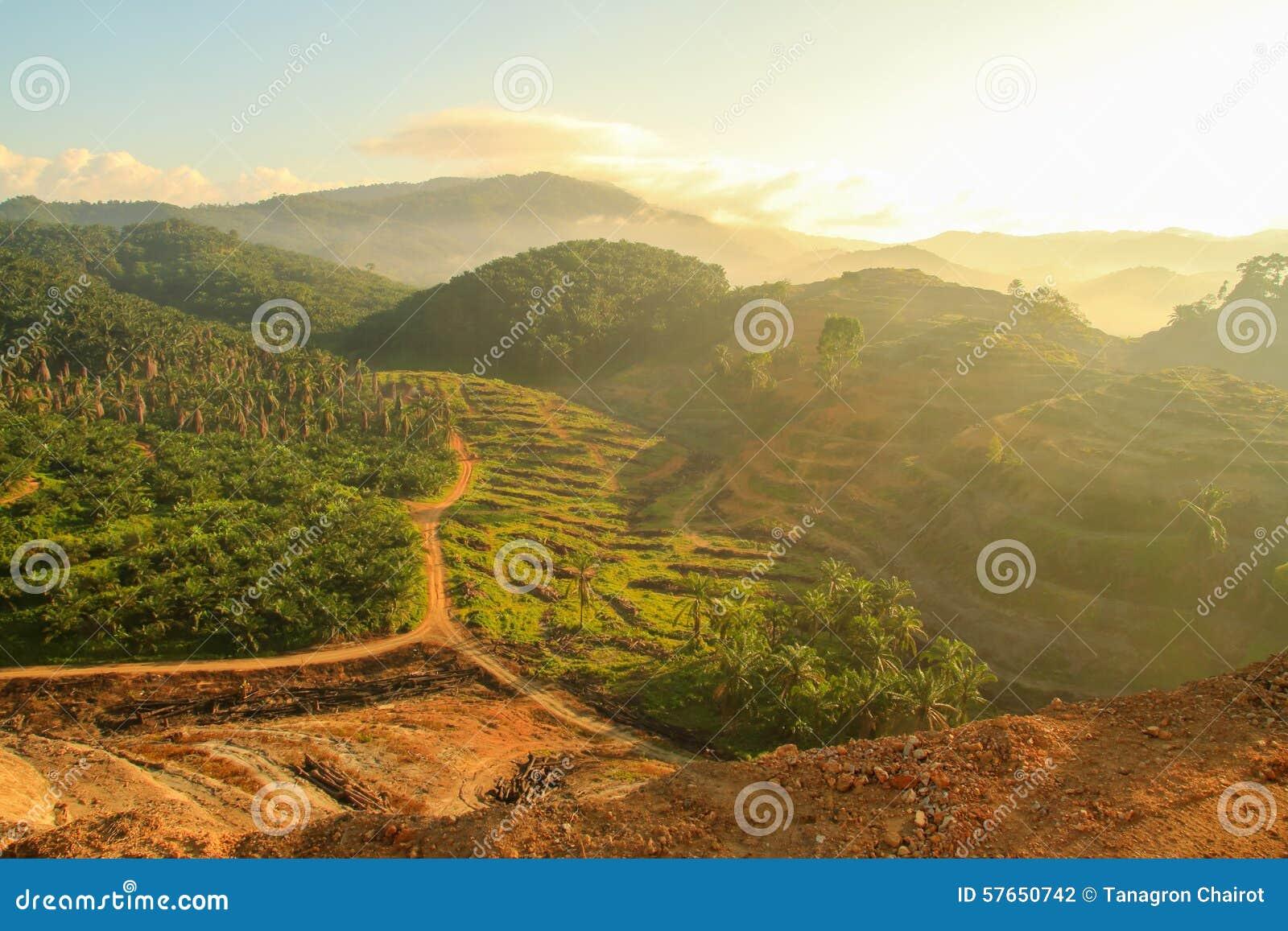Rolniczy tereny dla zasadzać nafcianej palmy