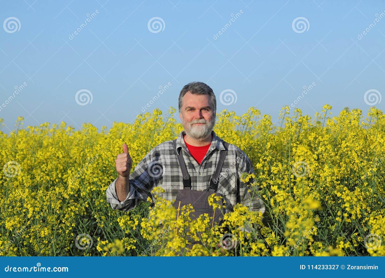 Rolnik gestykuluje w kwitnąć rapeseed pole