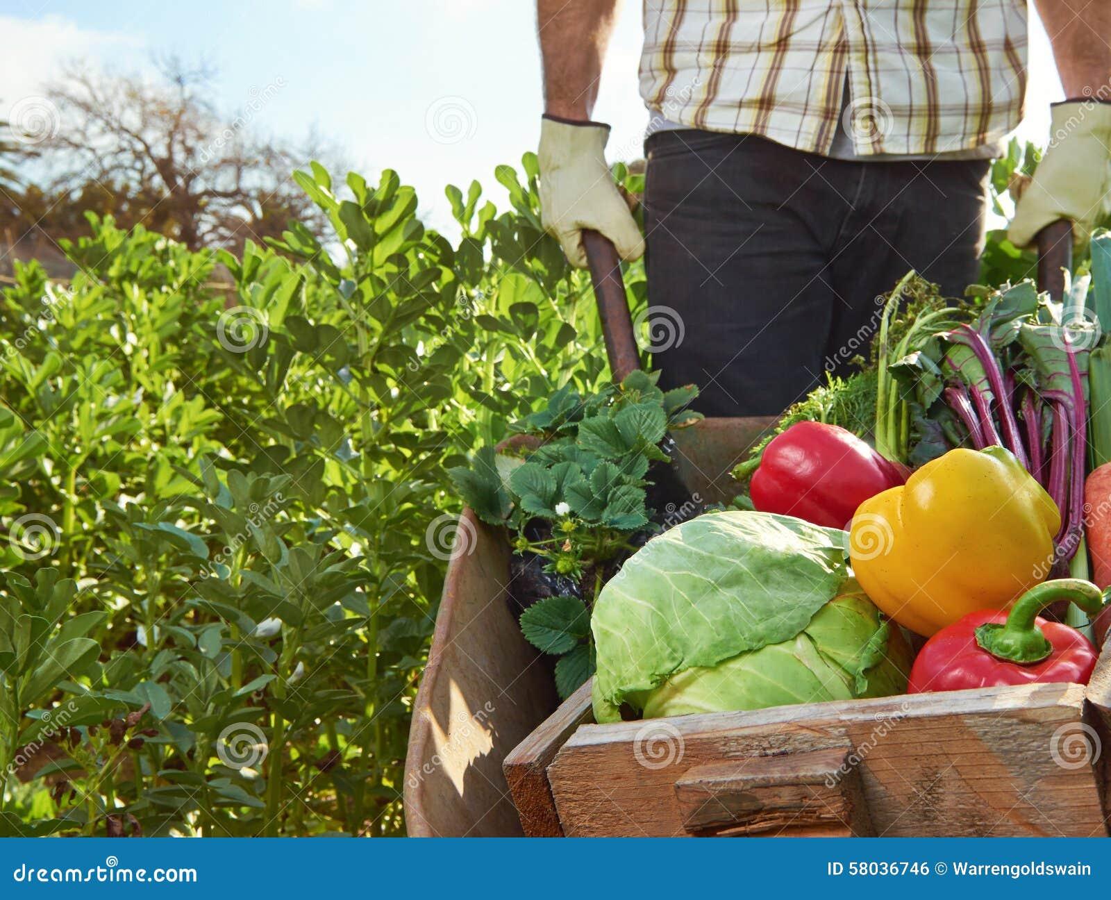 Rolnik na lokalnym podtrzymywalnym organicznie gospodarstwie rolnym