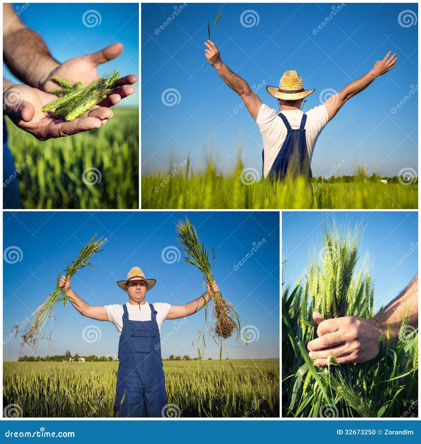 Rolnik odpowiada kolaż
